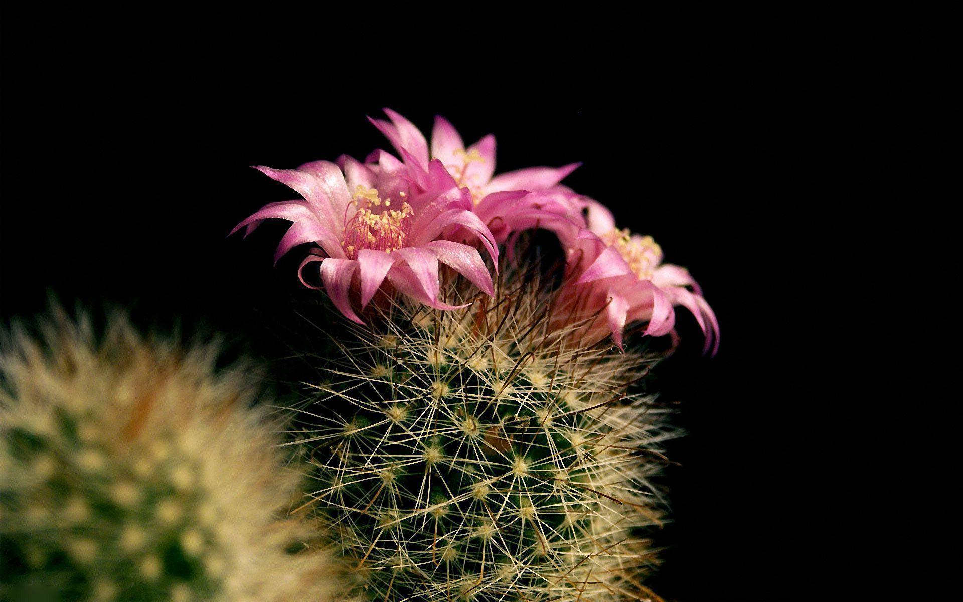 hd cactus wallpapers - photo #28