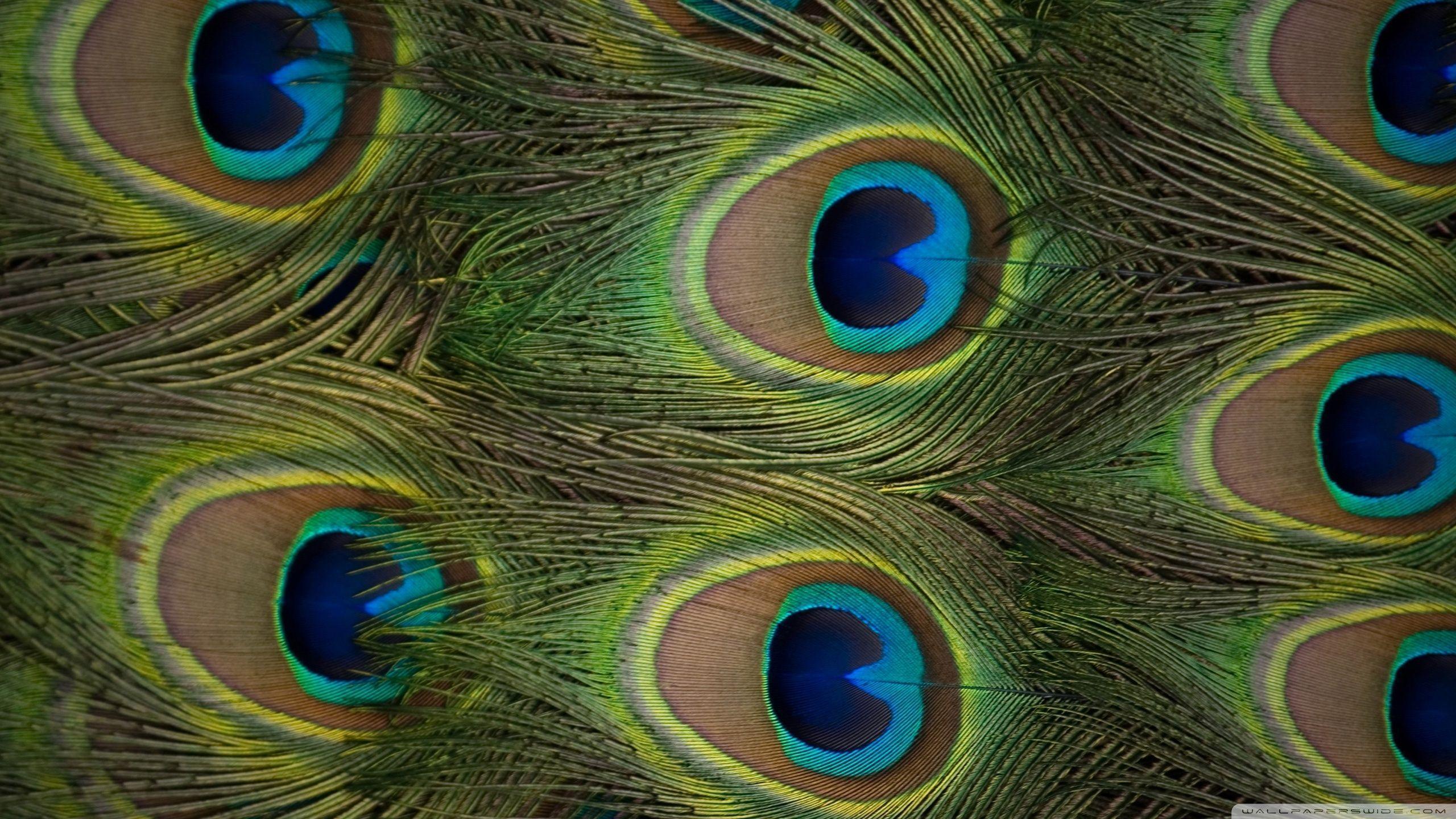 Peacock Feather Desktop Wallpaper Wallpapers Of P...