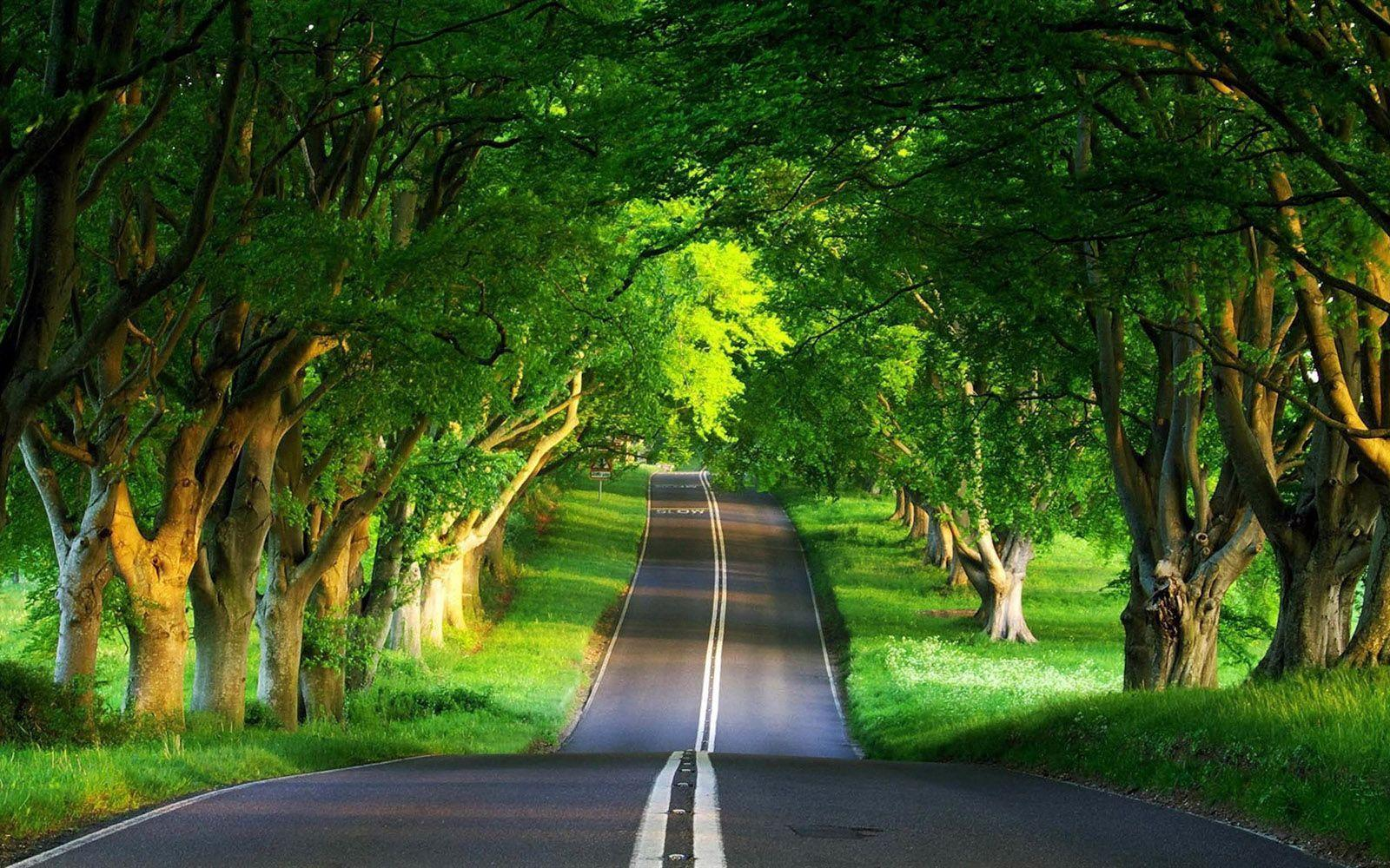 Download Cool Beautiful Nature Road Wallpapers