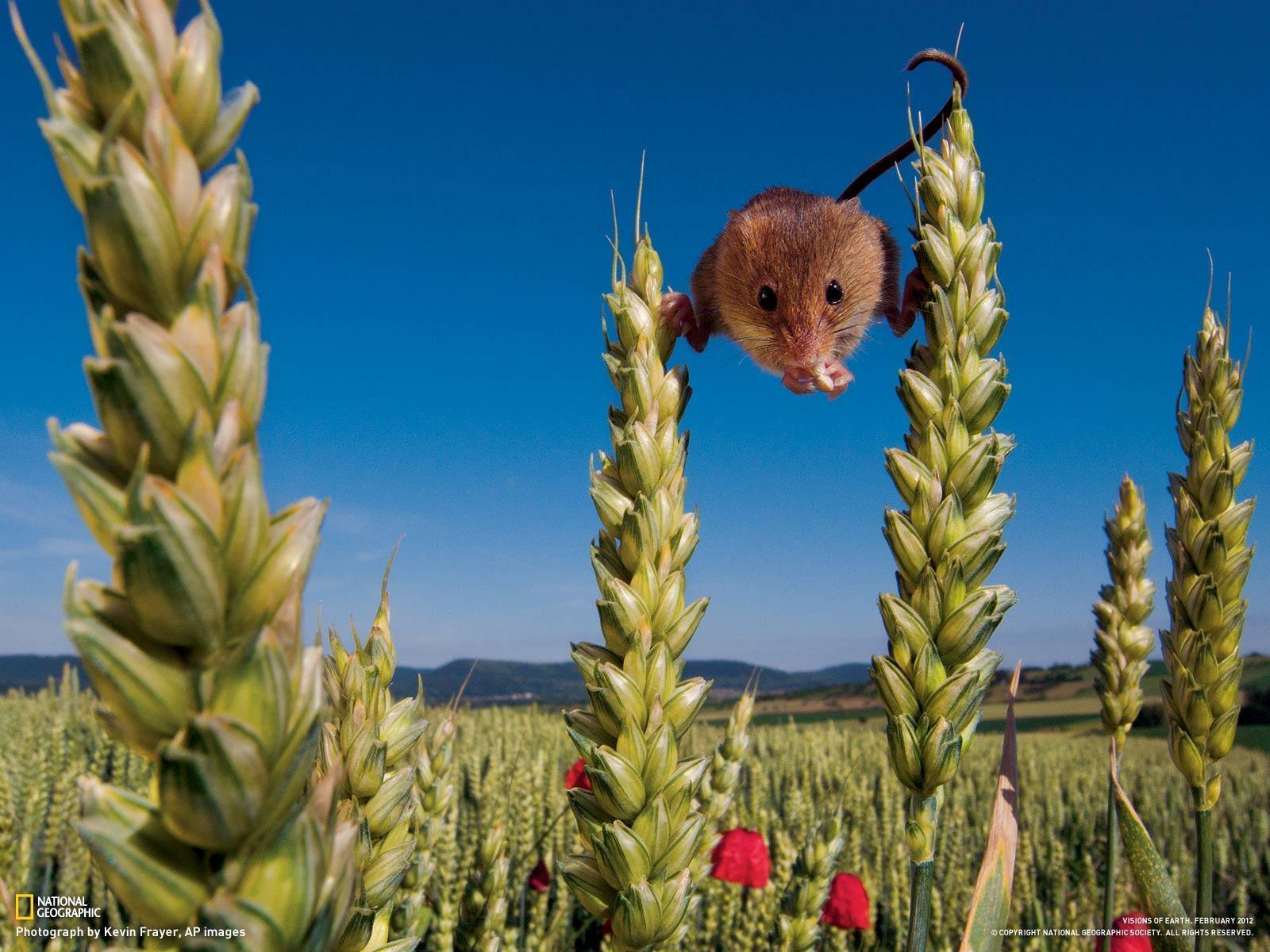 Curso de fotografia y video national geographic 2012 32