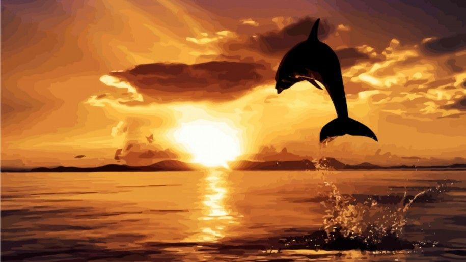 Dolphin Jumping Sunset Hd Wallpapers Wallpapers Nature Wallpapers