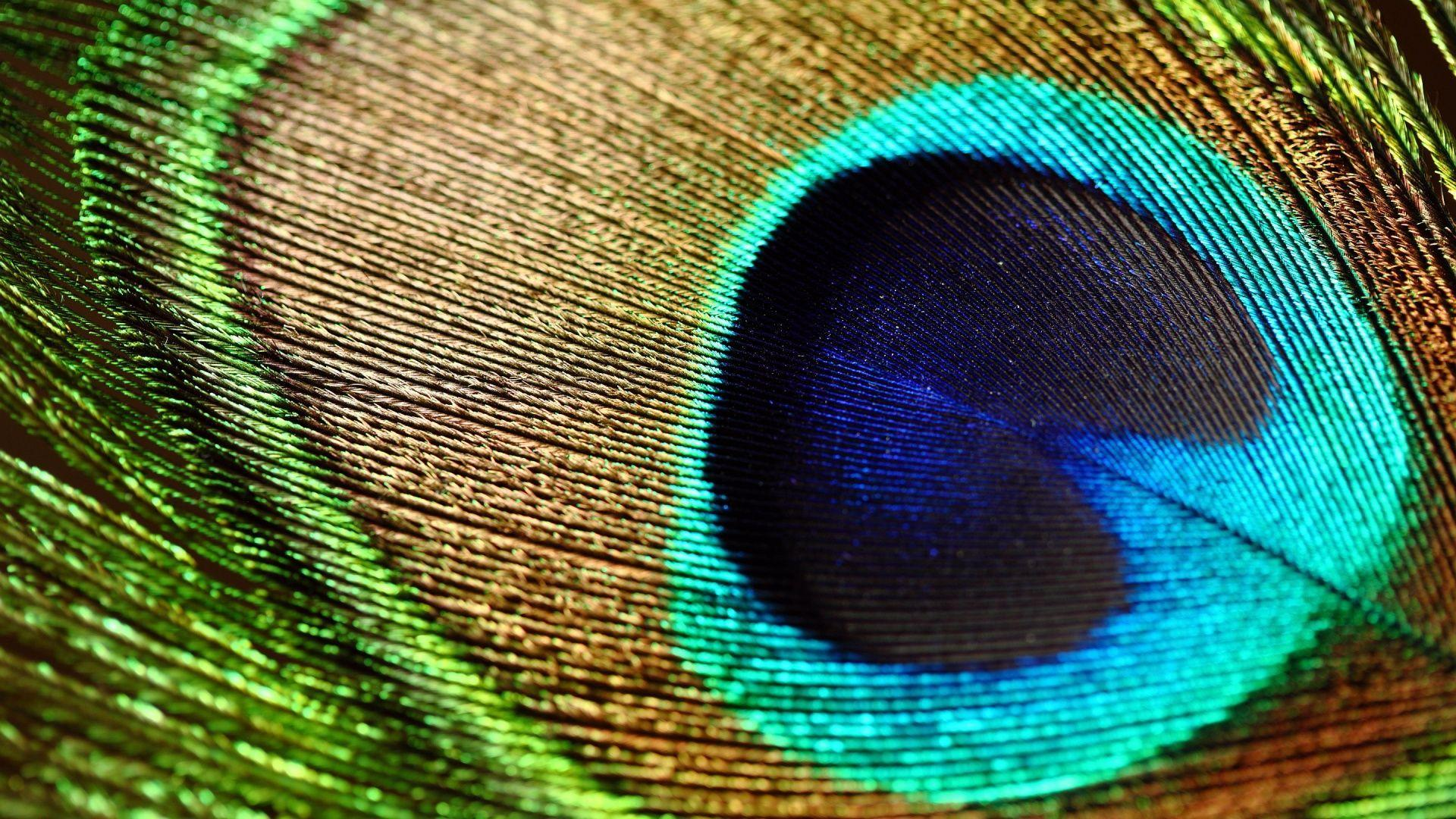 Peacock Feather Wallpaper Hd High Resolution Images Samsung