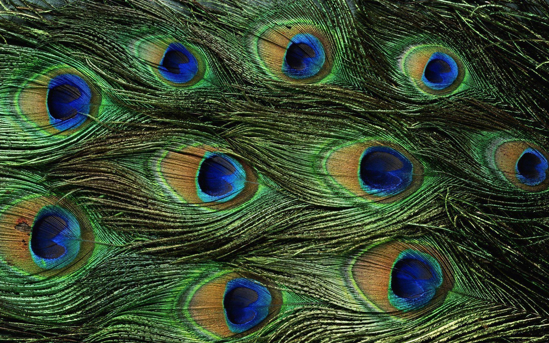 Peacock Art Photography Wallpaper Hq Backgrounds