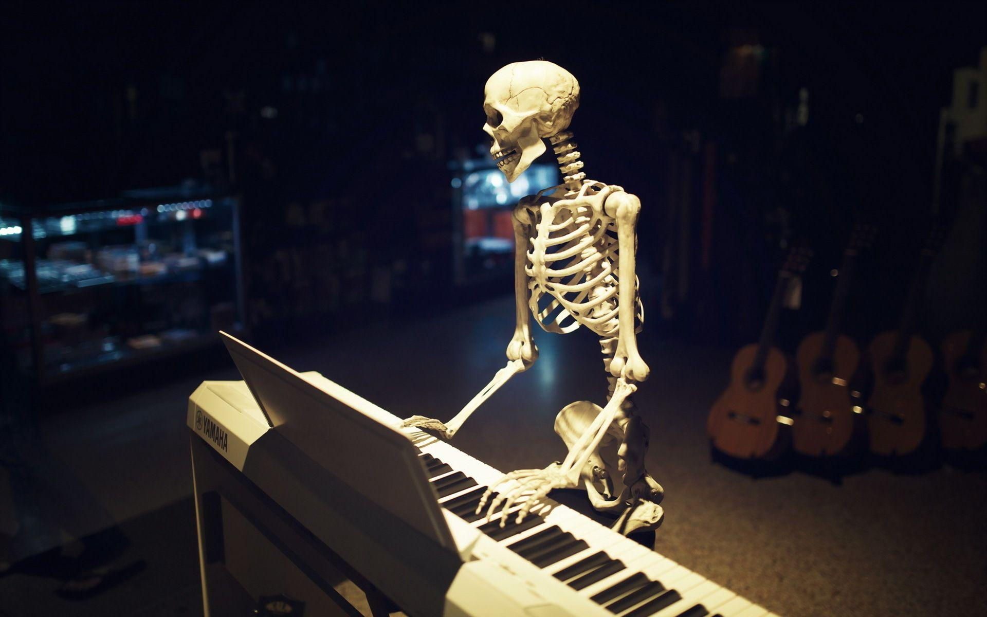 skeletal system hd images