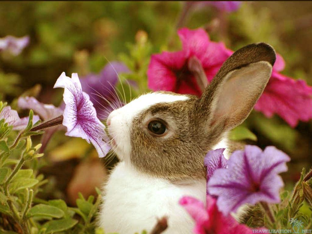 cute baby animal 2017 wallpapers wallpaper cave