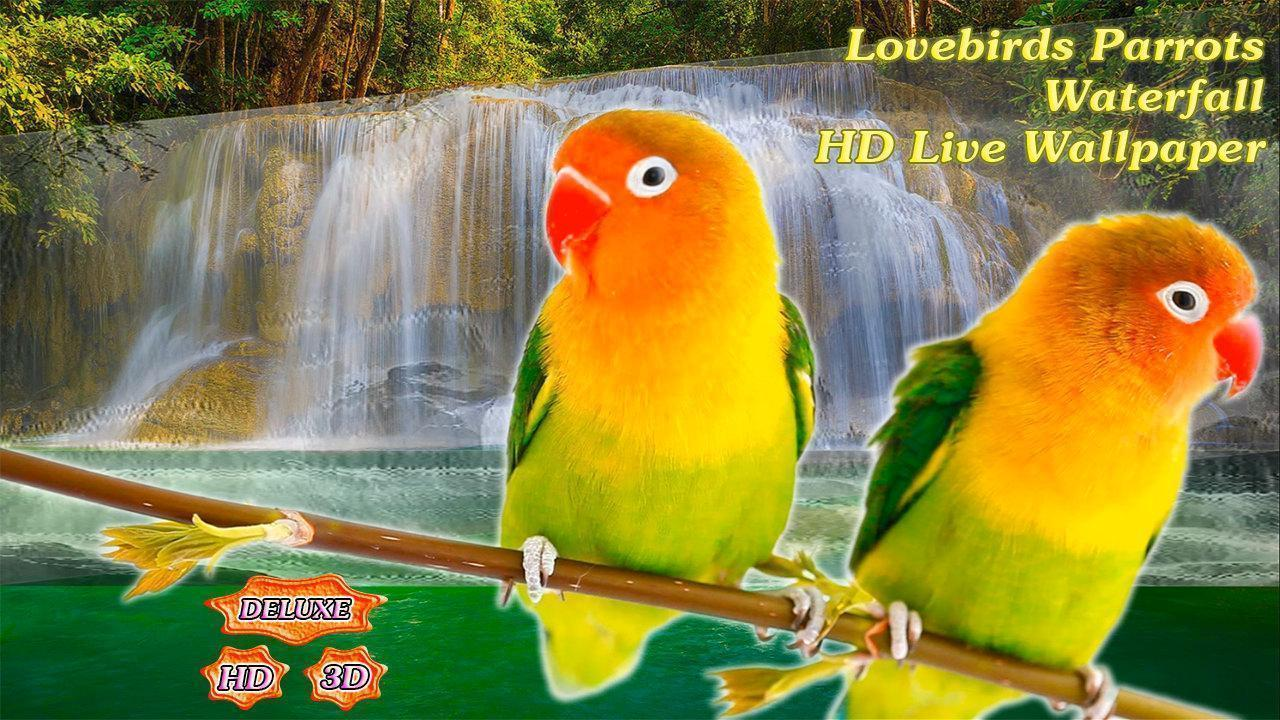 Love Birds Wallpaper For Mobile : Wallpapers Of Love Birds - Wallpaper cave