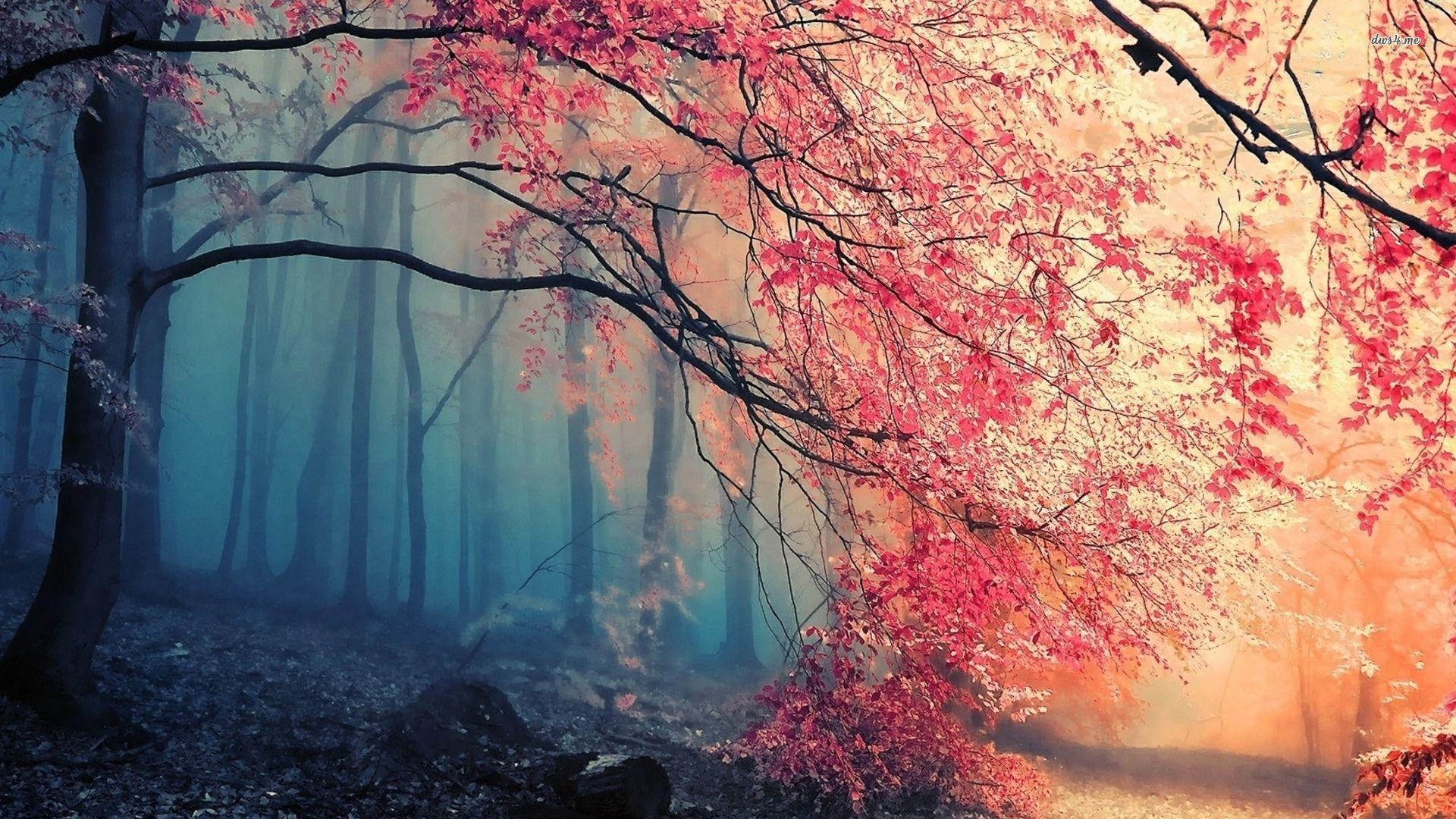amazing forest wallpaper - photo #34