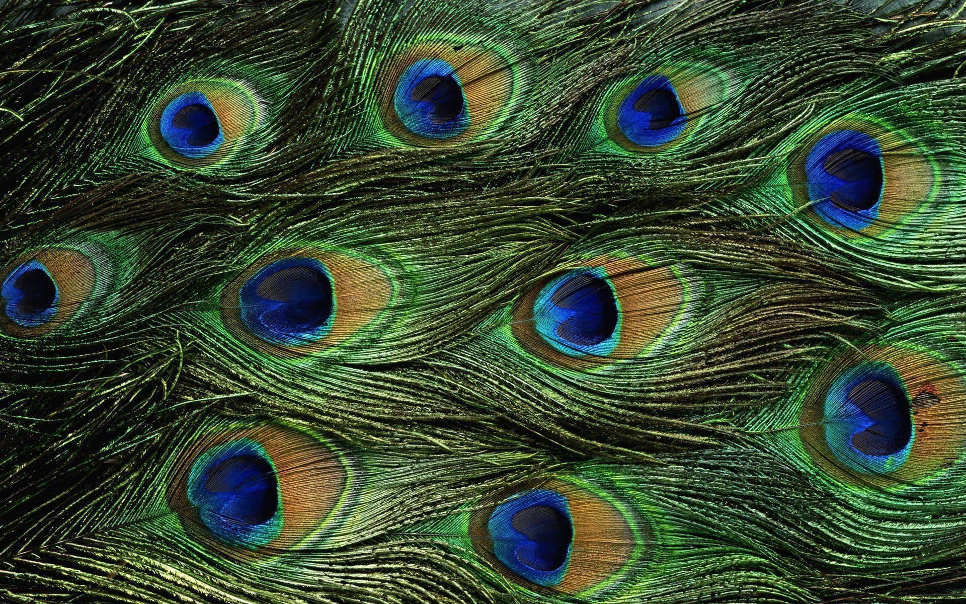 awesome colored feathers wallpaper - photo #22