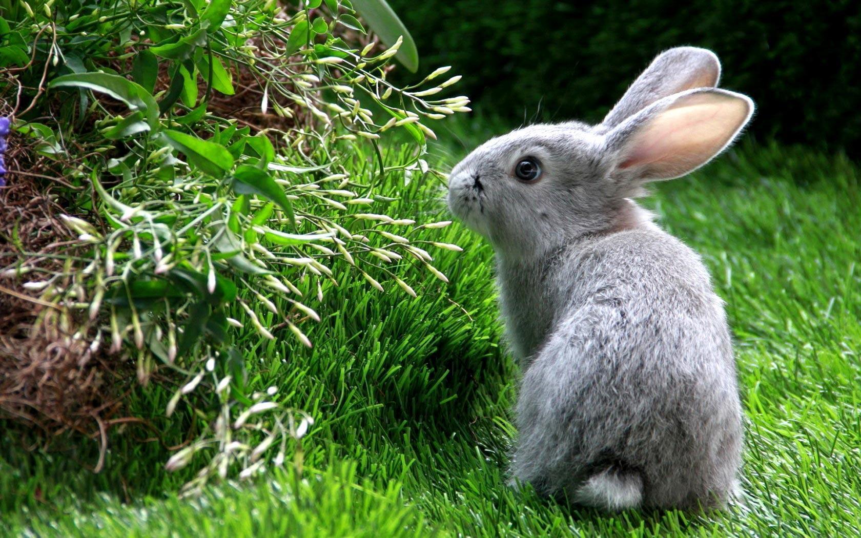 Rabbit Wallpapers For Desktop