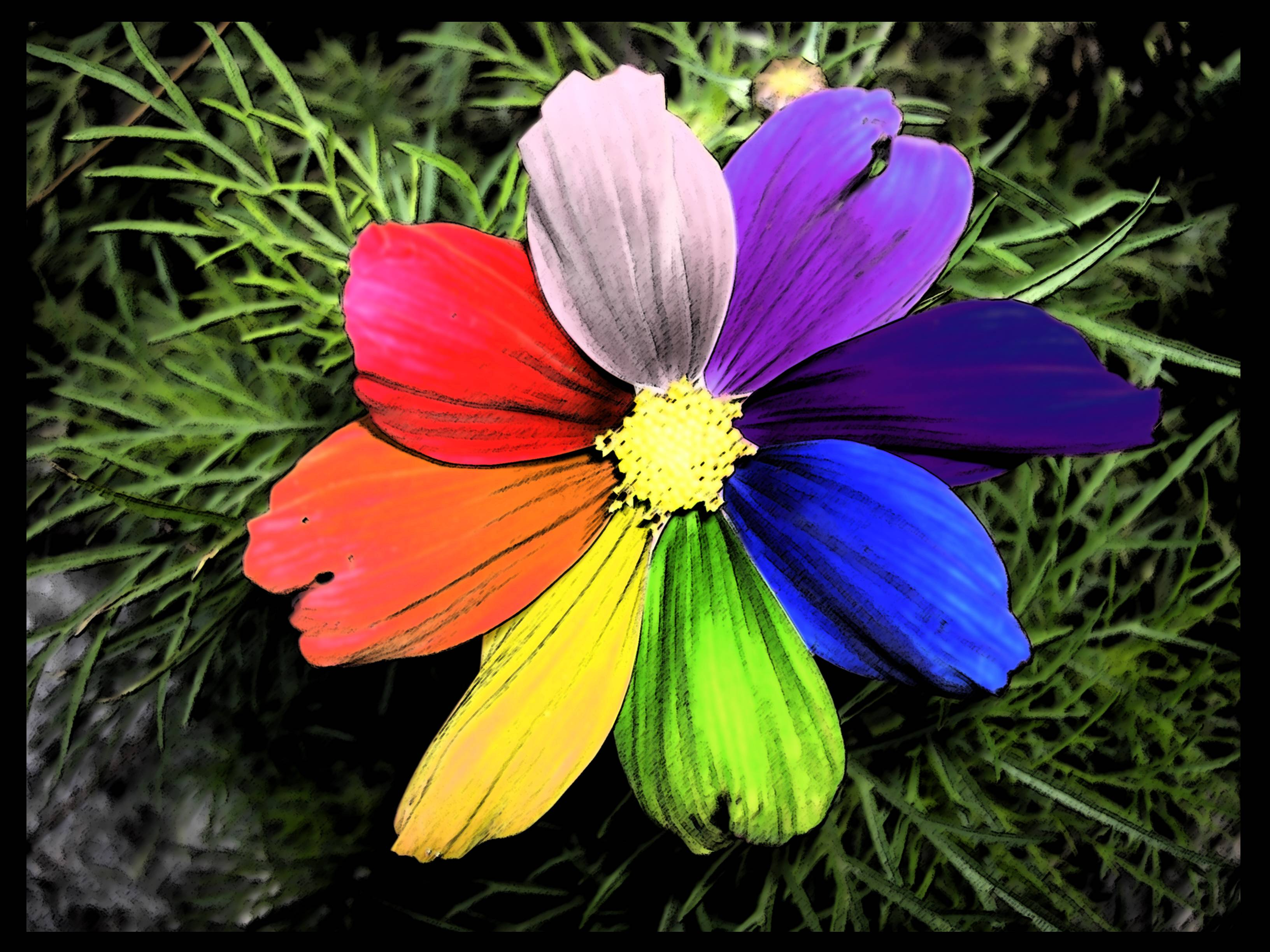 rainbow flowers wallpaper paintings - photo #13