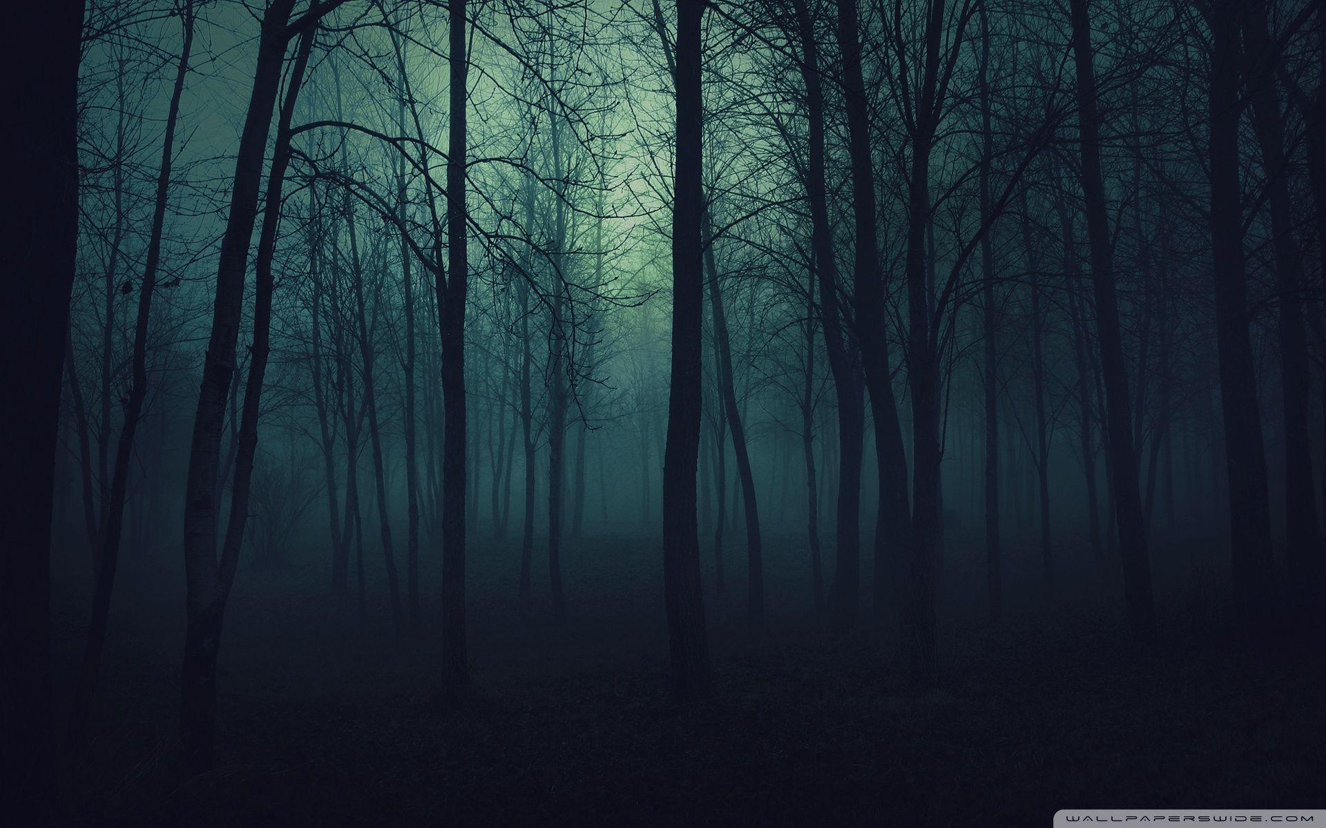 Dark Forest Wallpapers Hd Wallpaper Cave