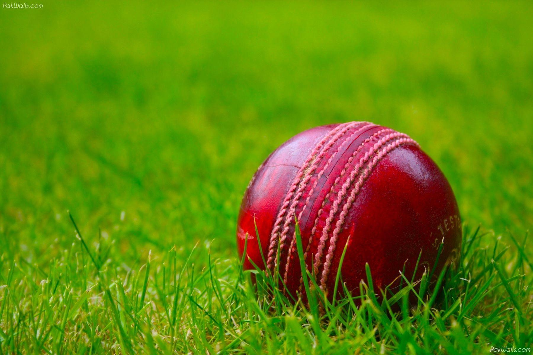 Cricket Wallpapers - Wallpaper Cave