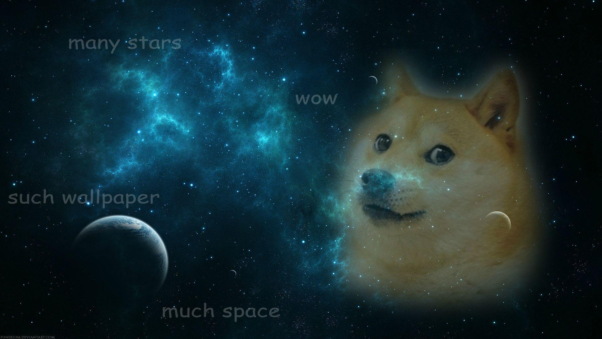Doge, Wallpapers and Search on Pinterest