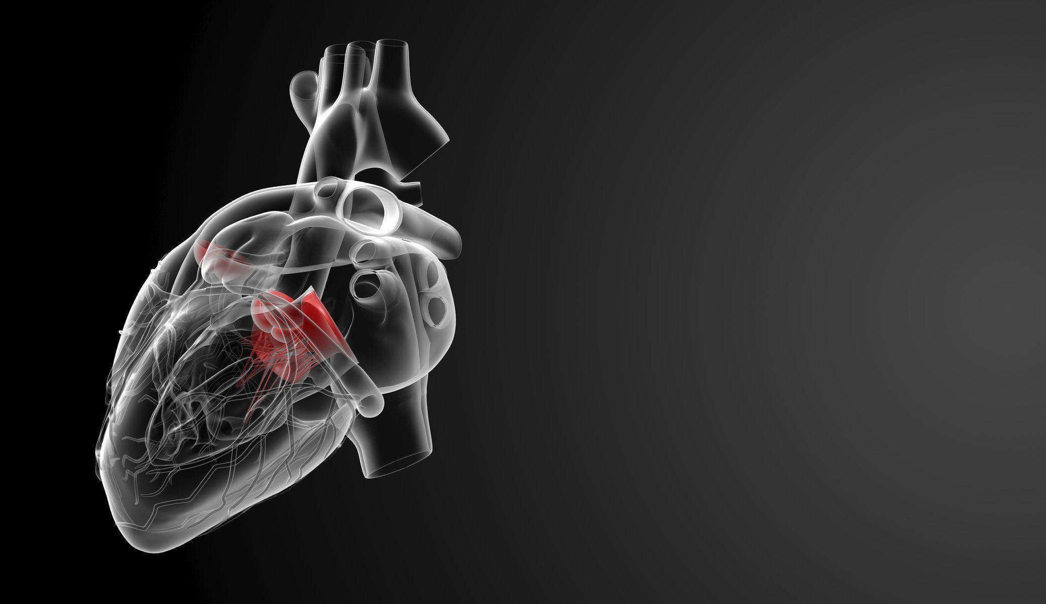 medicine human organ heart HD wallpaper