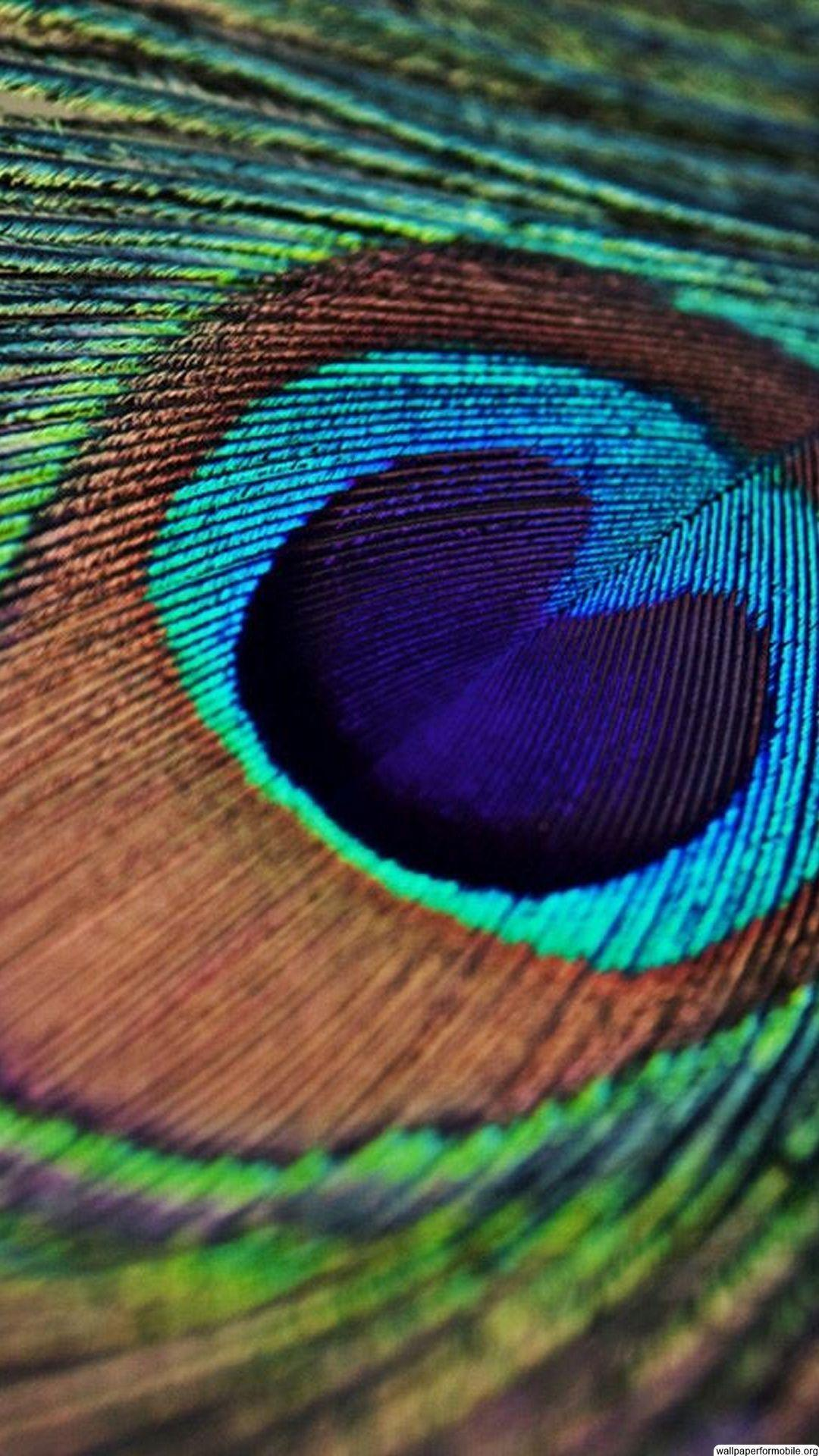 Peacock Feathers Wallpapers - Wallpaper Cave  Peacock Feather...