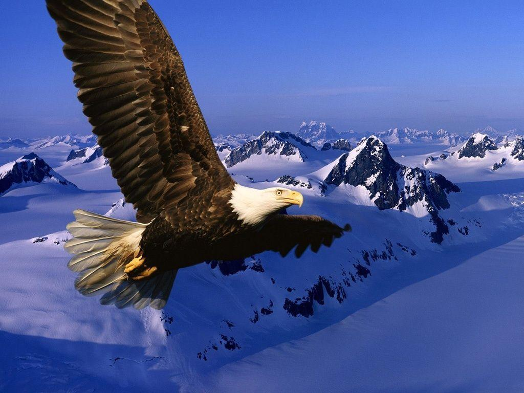 Eagles Desktop Backgrounds - WallpaperSafari
