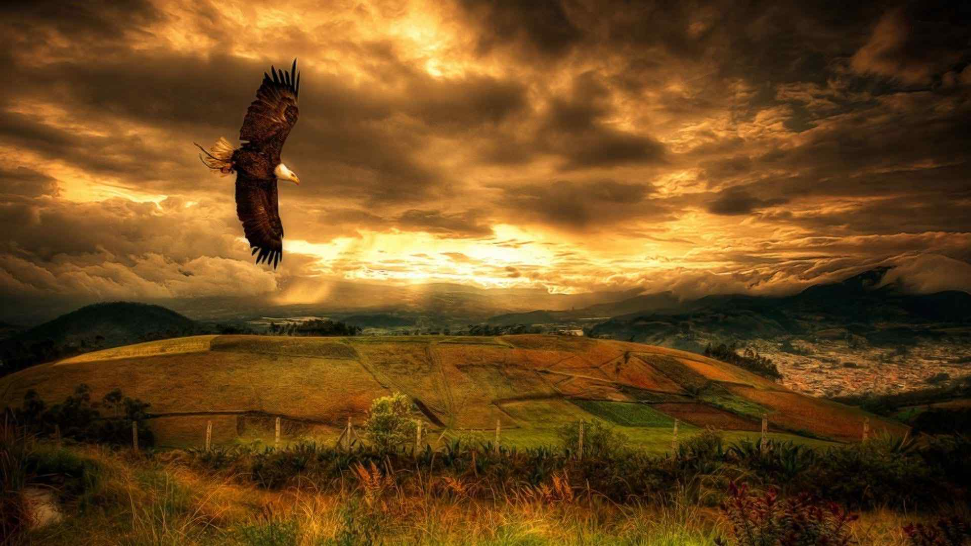 Flying Eagle HD Wallpapers - HD Wallpapers Pop