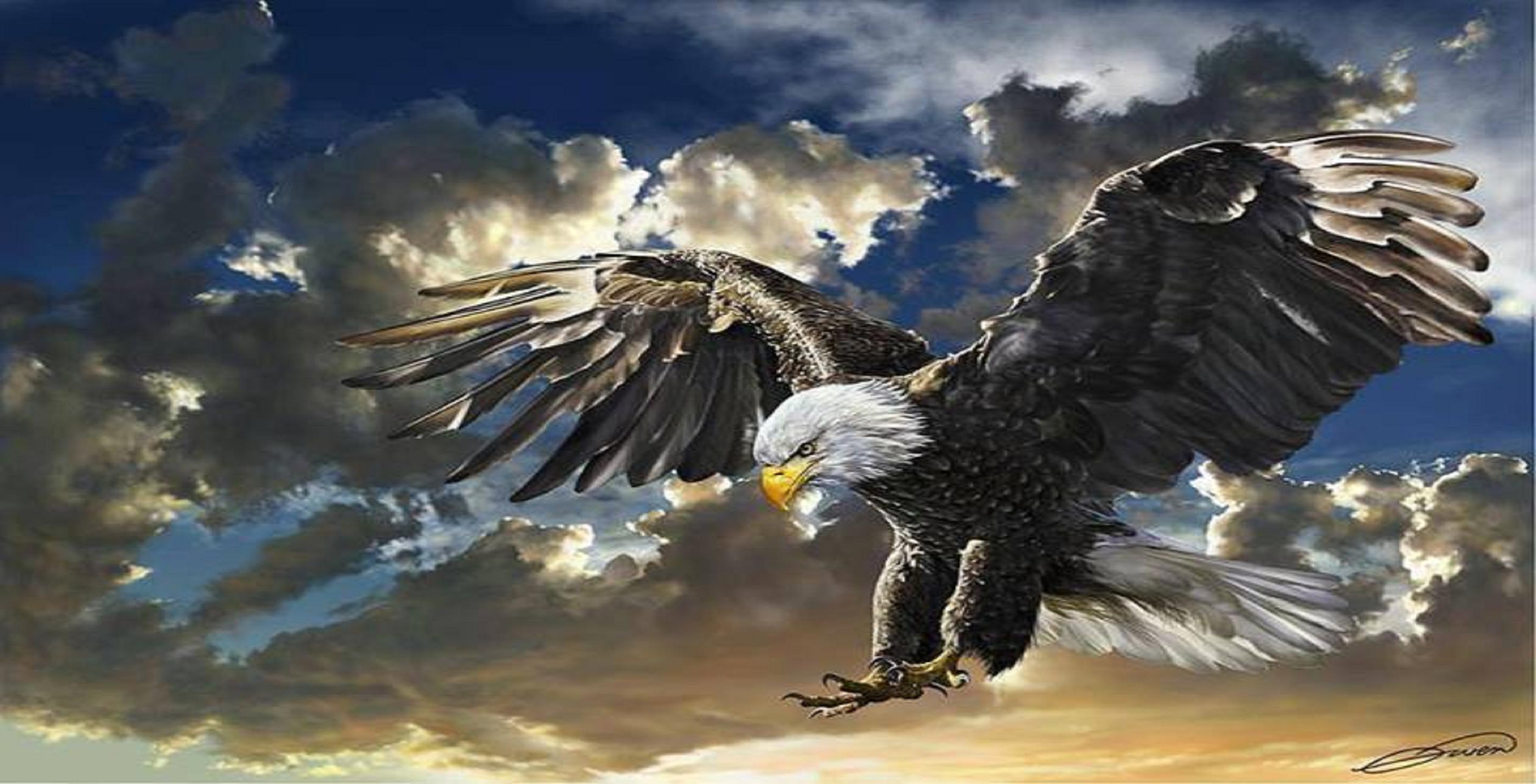 Eagles Desktop Backgrounds Wallpaper Cave