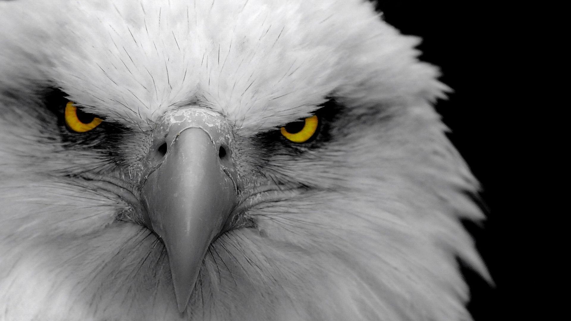 Full HD 1080p Eagle Wallpapers HD, Desktop Backgrounds 1920x1080 ...