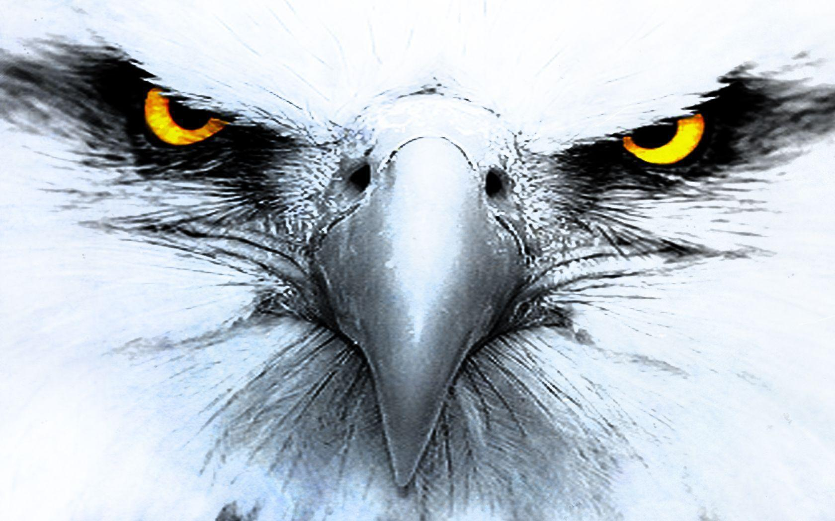 328 Eagle HD Wallpapers | Backgrounds - Wallpaper Abyss