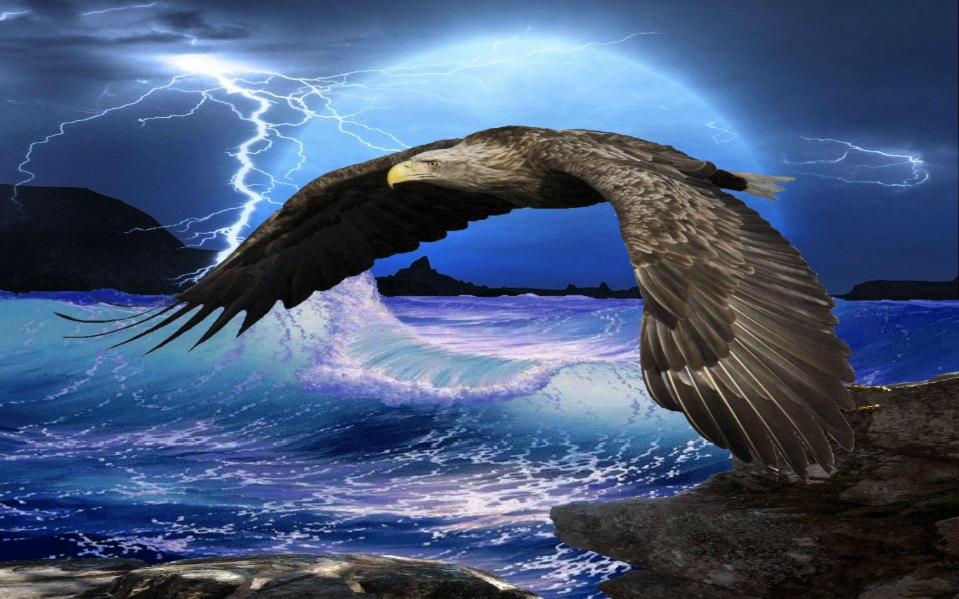 Flying Eagle HD Wallpapers | Eagle Flying HD Pictures | HD ...