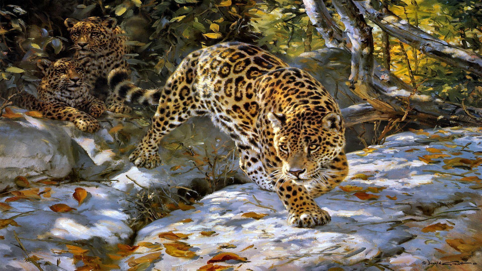 Animals Jaguars Wallpapers Hd Desktop And Mobile: Jaguar Wallpapers