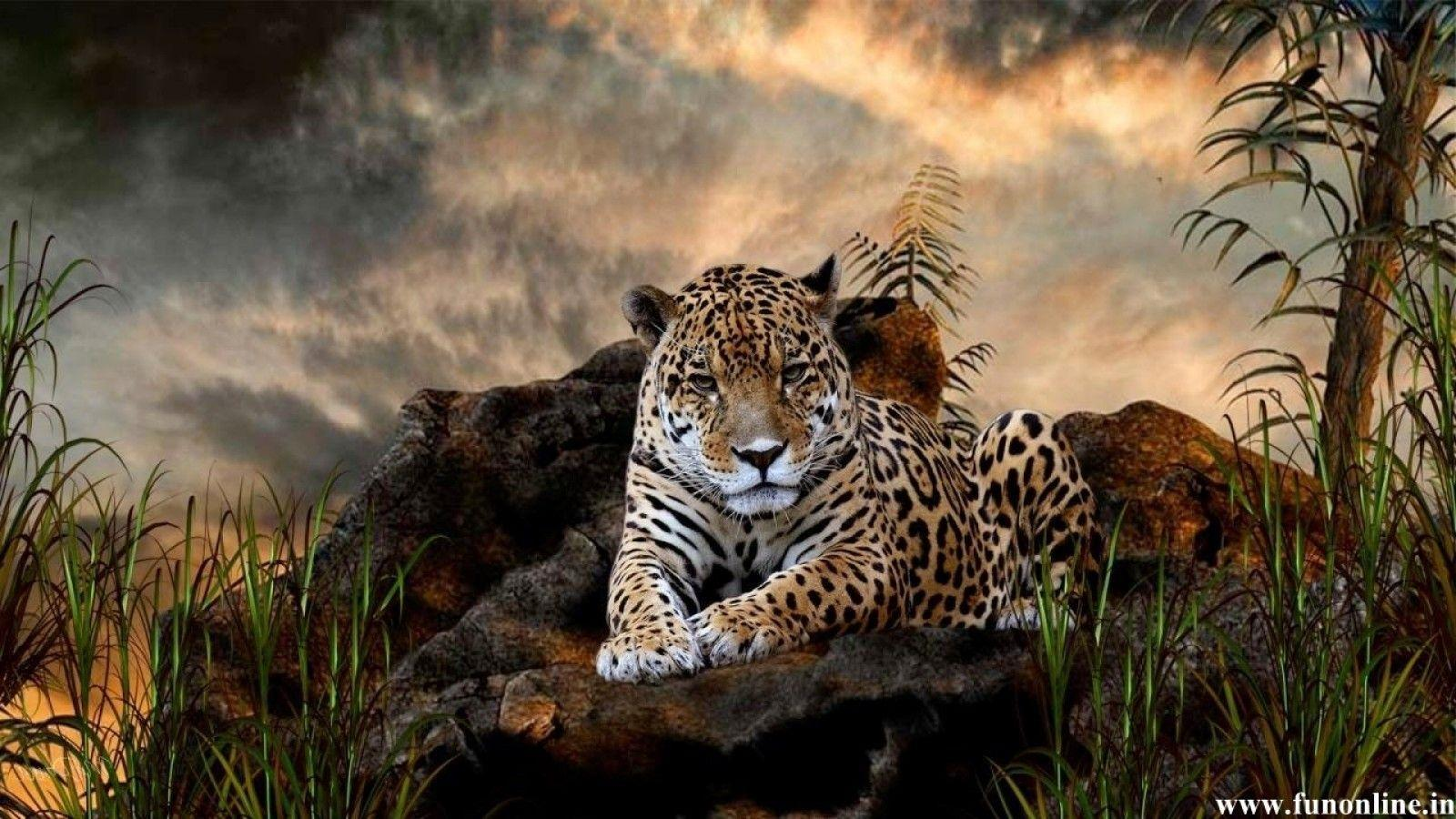 Jaguar wallpapers wallpaper cave for Fond ecran noel gratuit pour ordinateur