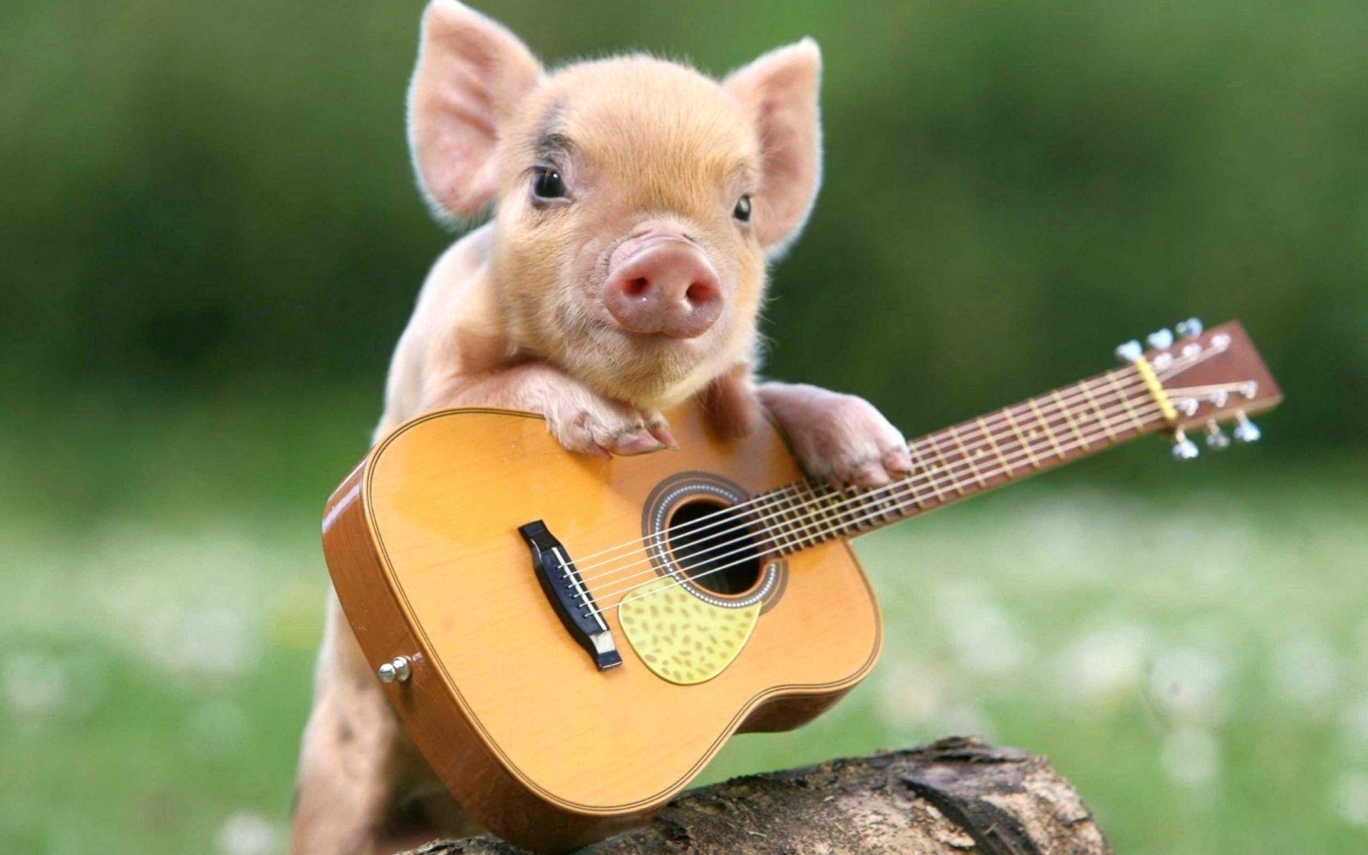 Cute Pig Wallpaper HD Download For Desktop Of Little Cute Piglet