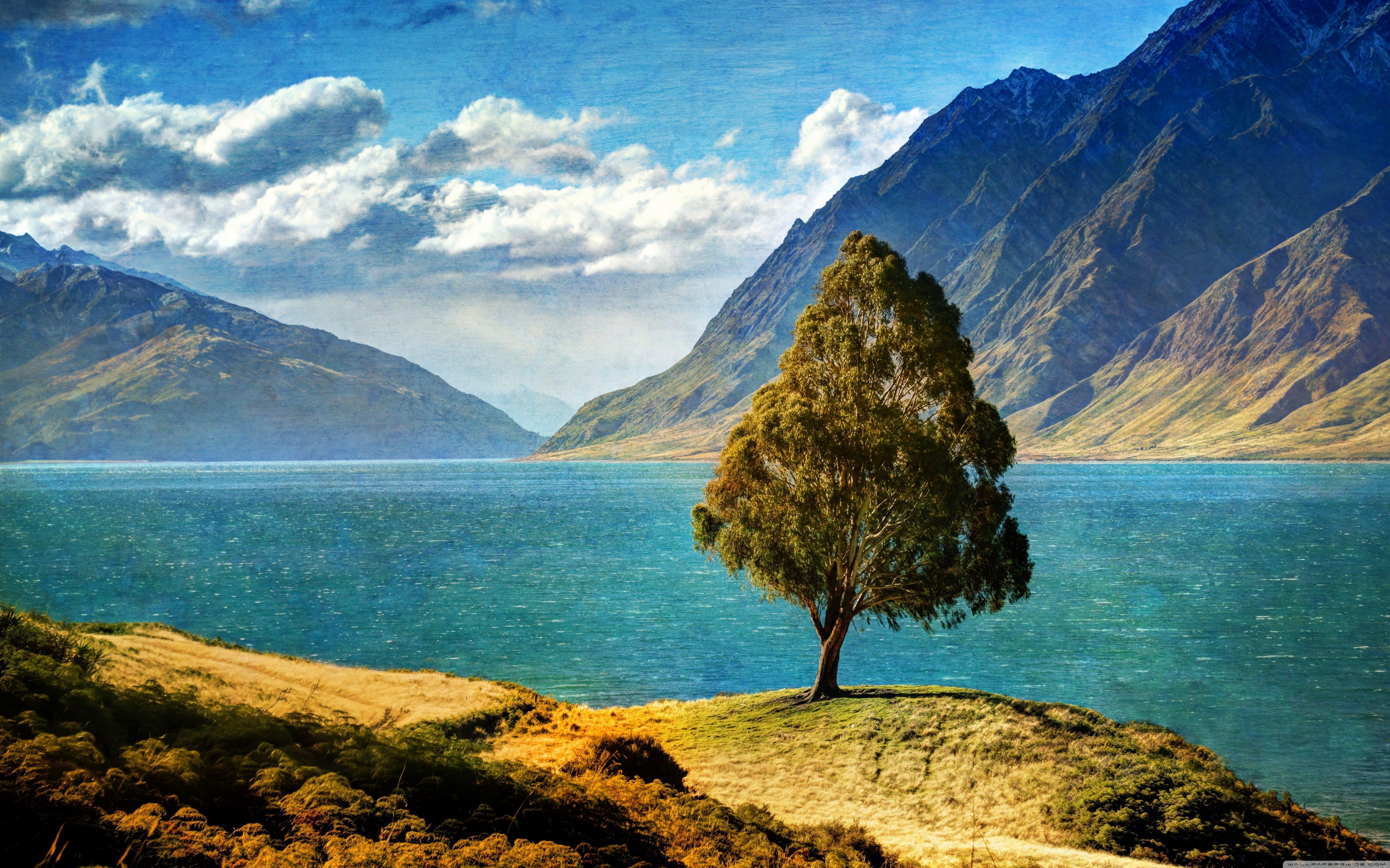 Tree By The Lake HD desktop wallpapers : High Definition
