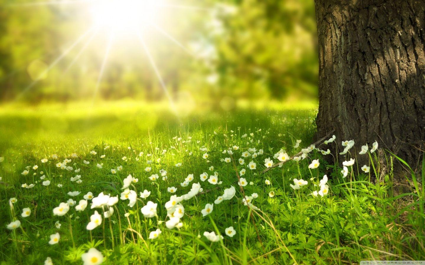 Spring wallpapers HD free download | HD Wallpapers, Backgrounds ...