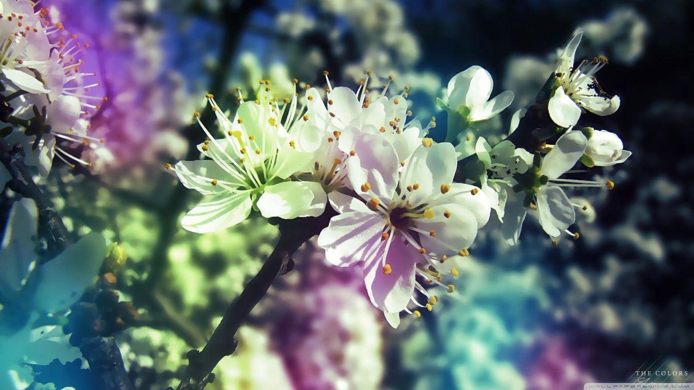 Colorful Spring HD desktop wallpaper : Widescreen : High ...