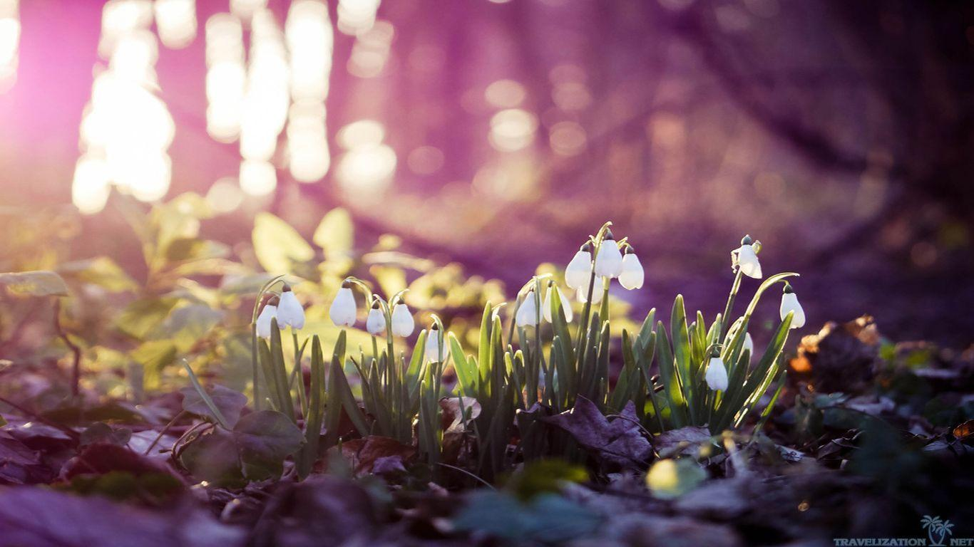 Almost spring - Other & Abstract Background Wallpapers on ... |Spring Thaw Background Computer