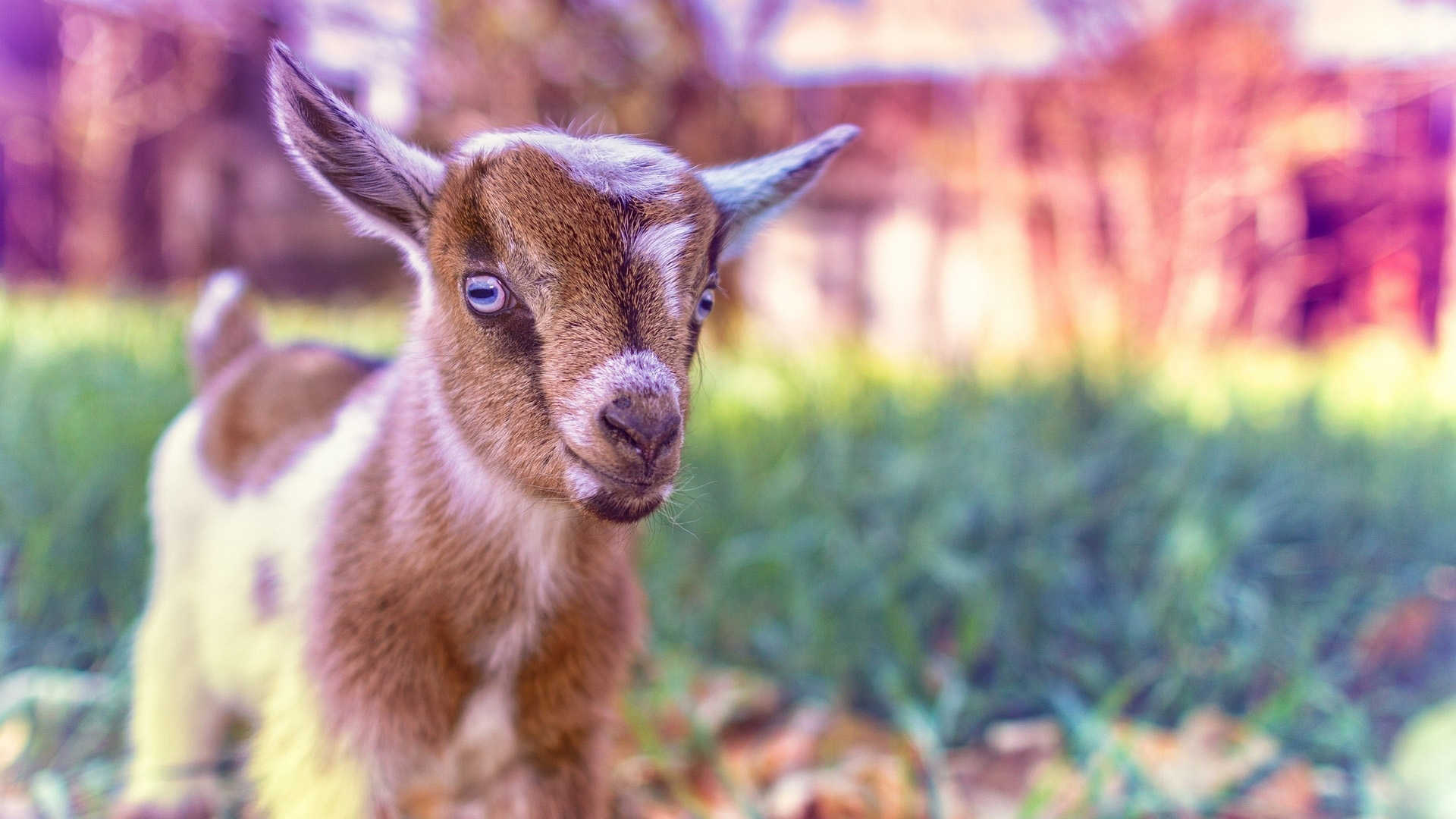 Deadshot wallpaper galleryhip com the hippest galleries - Cute Baby Goat Wallpaper