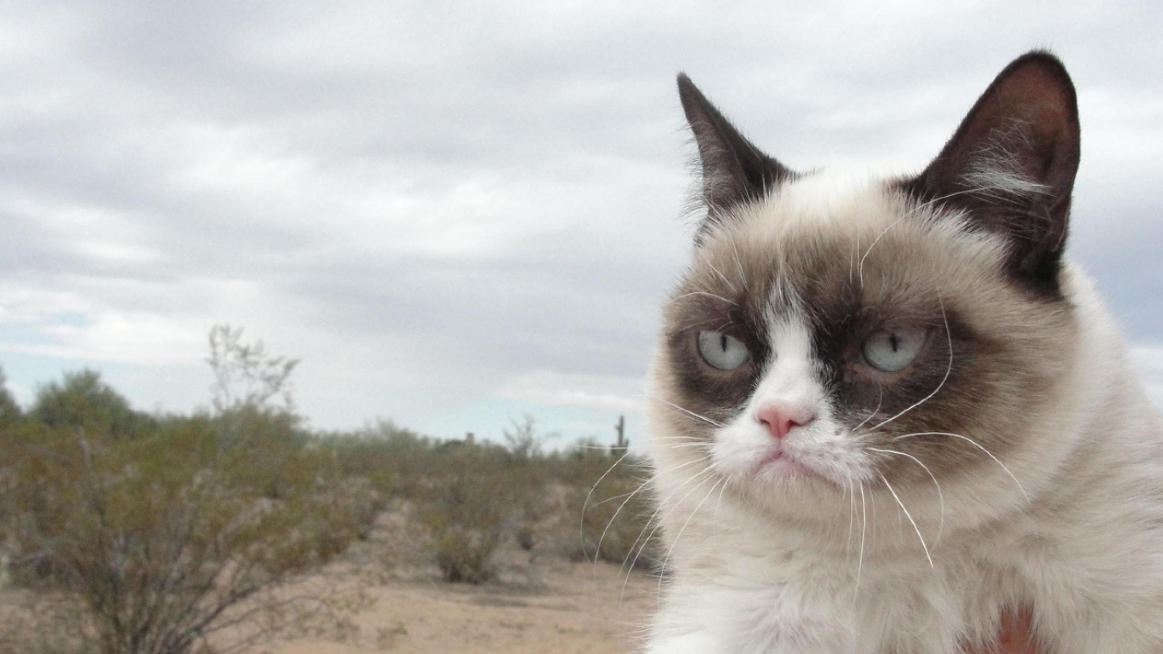 grumpy cat hd wallpapers - photo #6