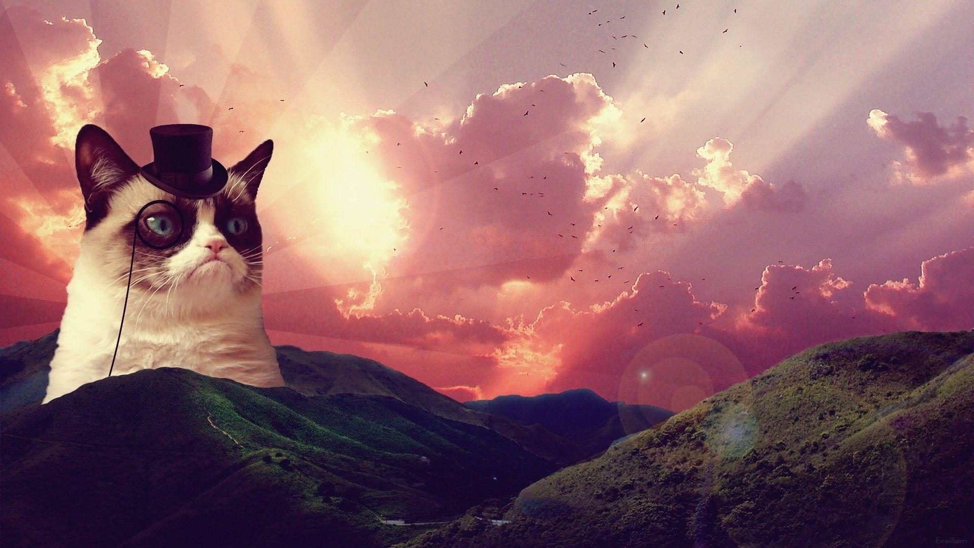 Grumpy Cat Spring Picture