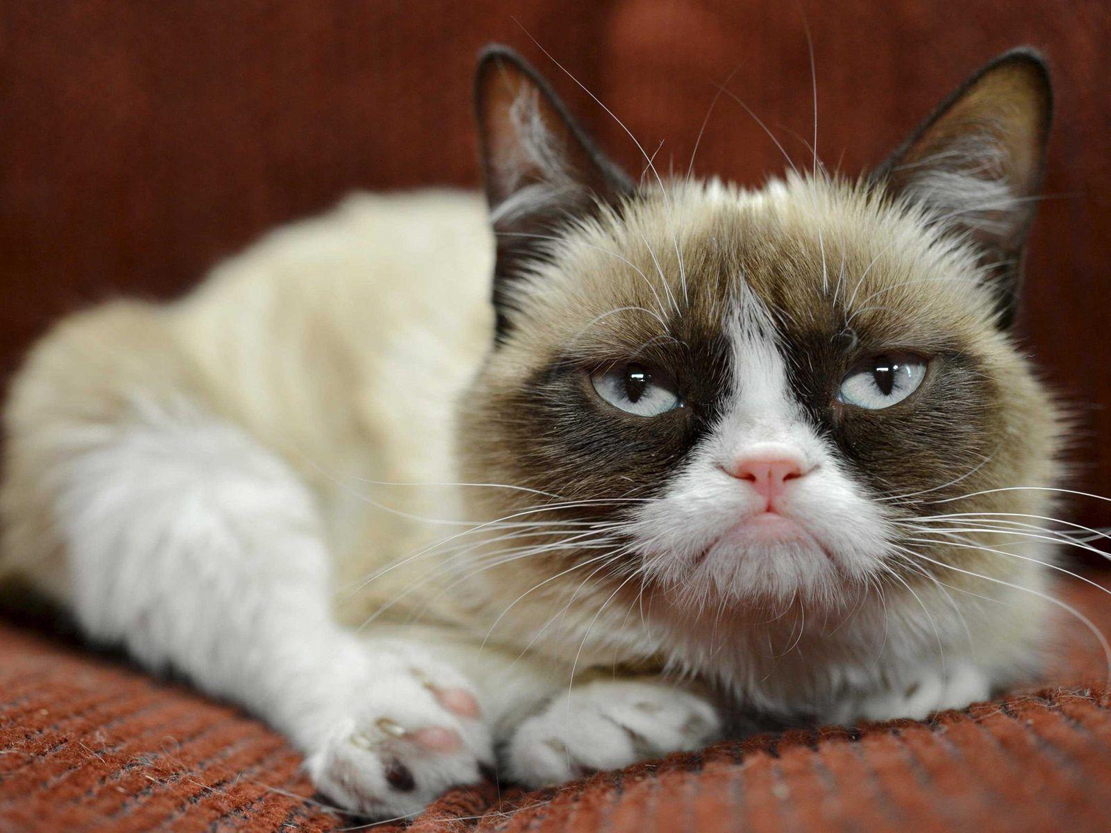 Grumpy Cat Wallpapers