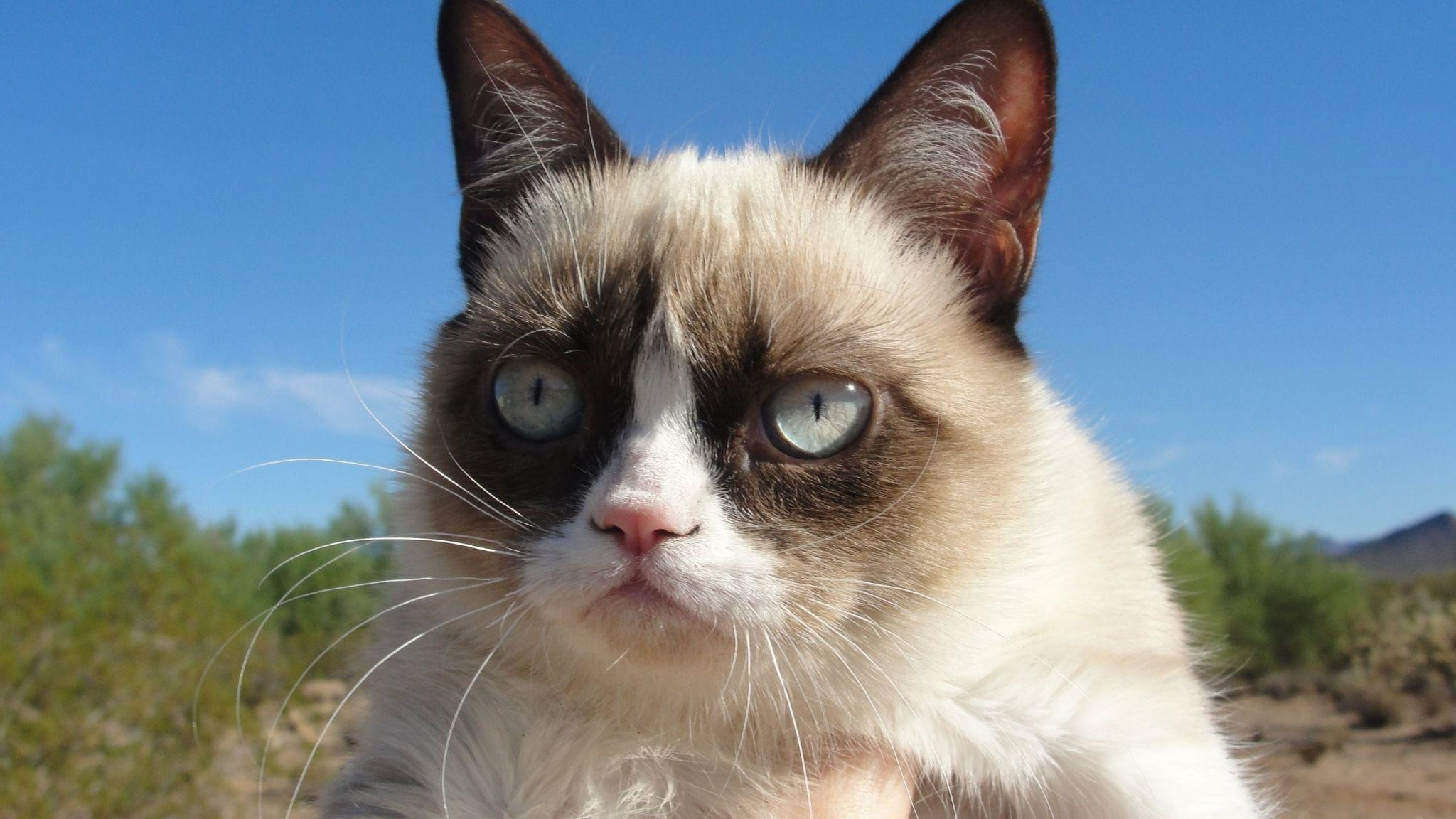 grumpy cat hd wallpapers - photo #18