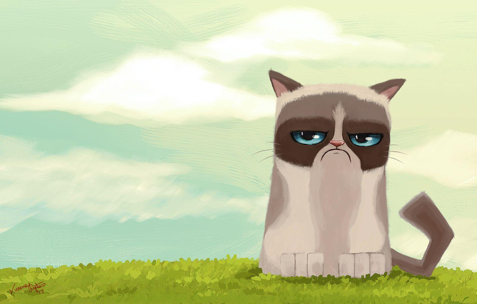 grumpy cat wallpapers wallpaper cave