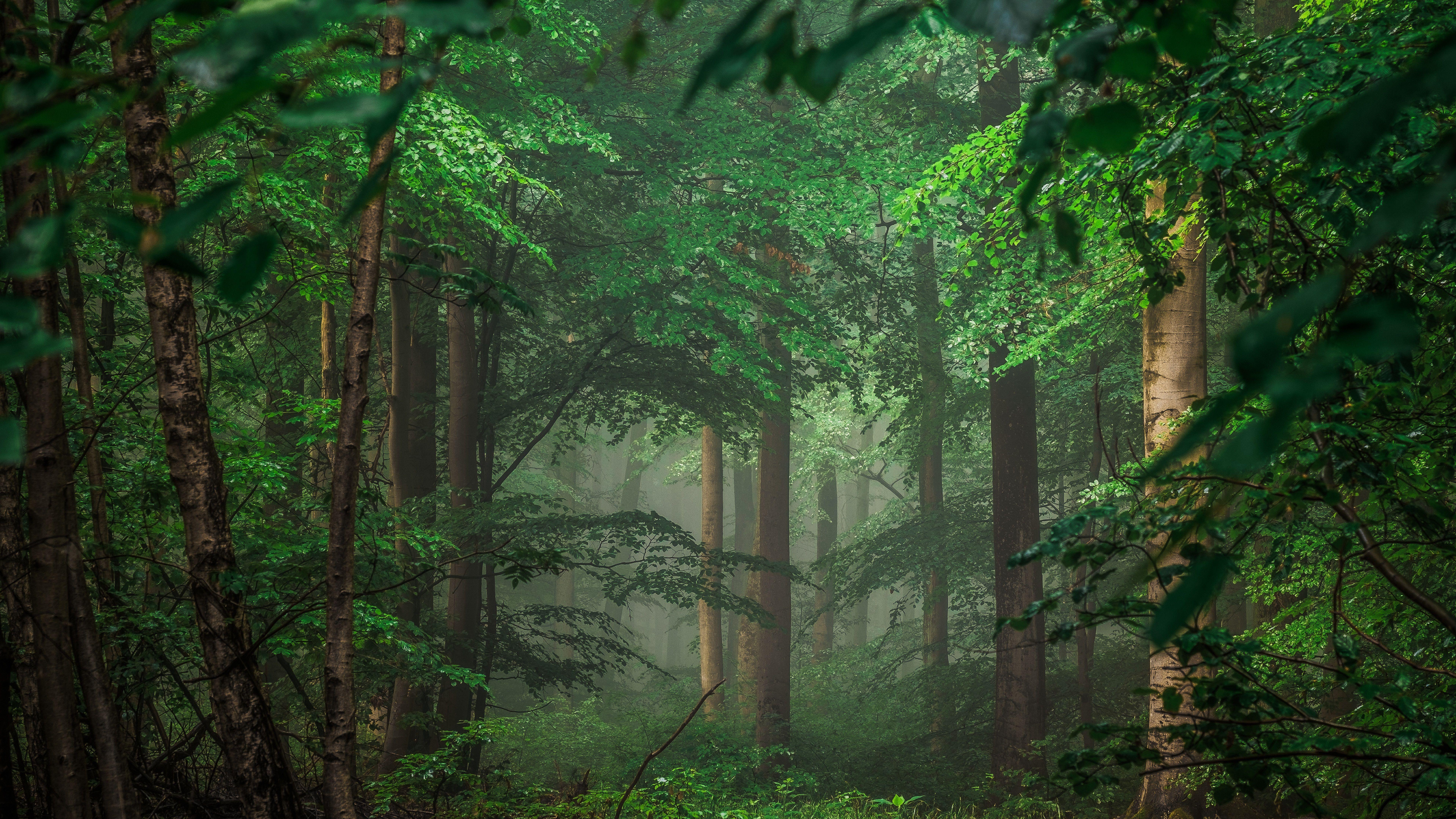 Green Forest 8K Wallpaper | Wallpapers 4K 5K 8K