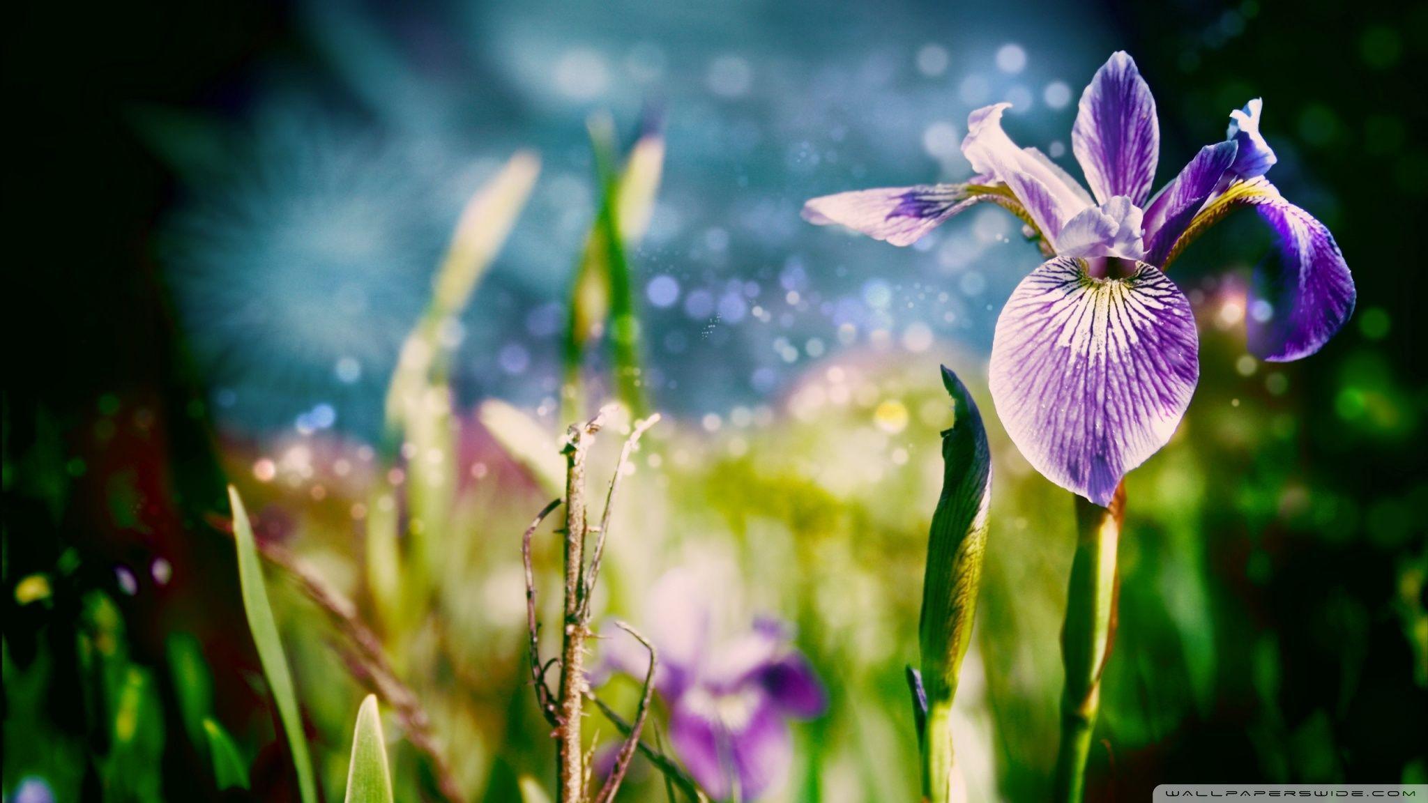 Magic flowers hd desktop wallpaper widescreen high definition