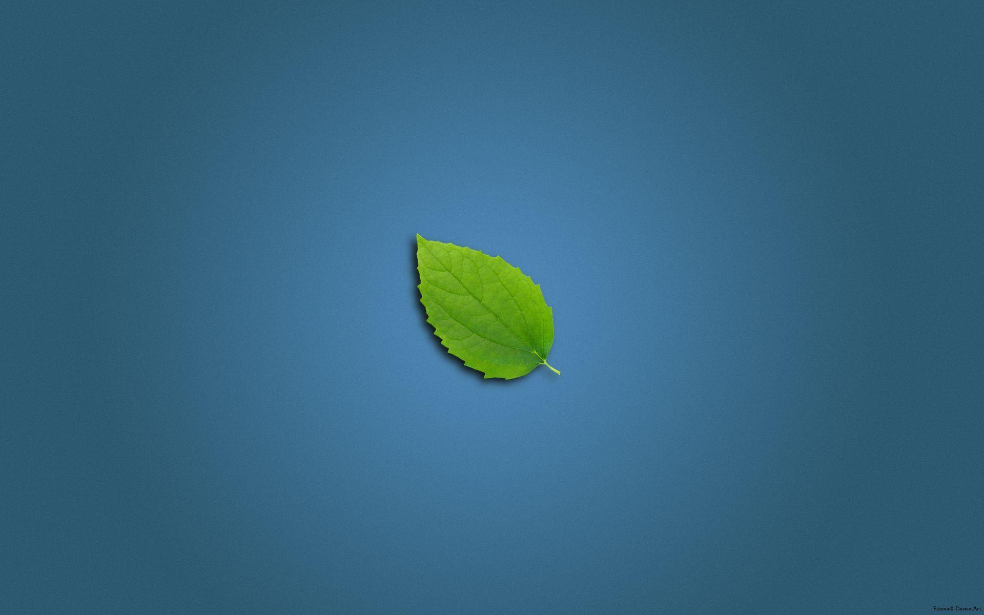 Clean Leaf Wallpapers - 10018