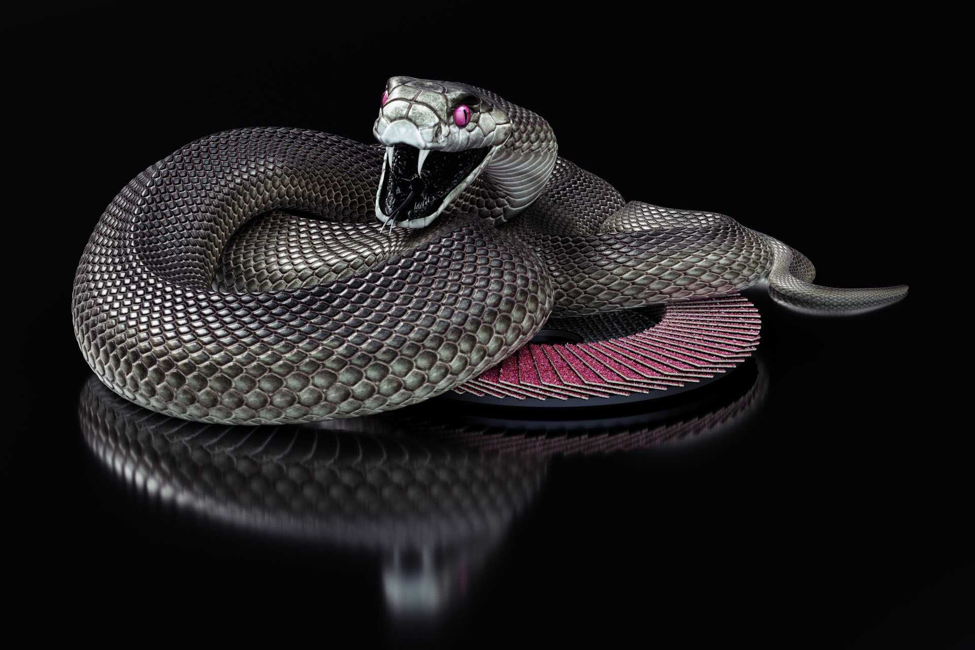 Black Mamba Wallpapers - Wallpaper Cave