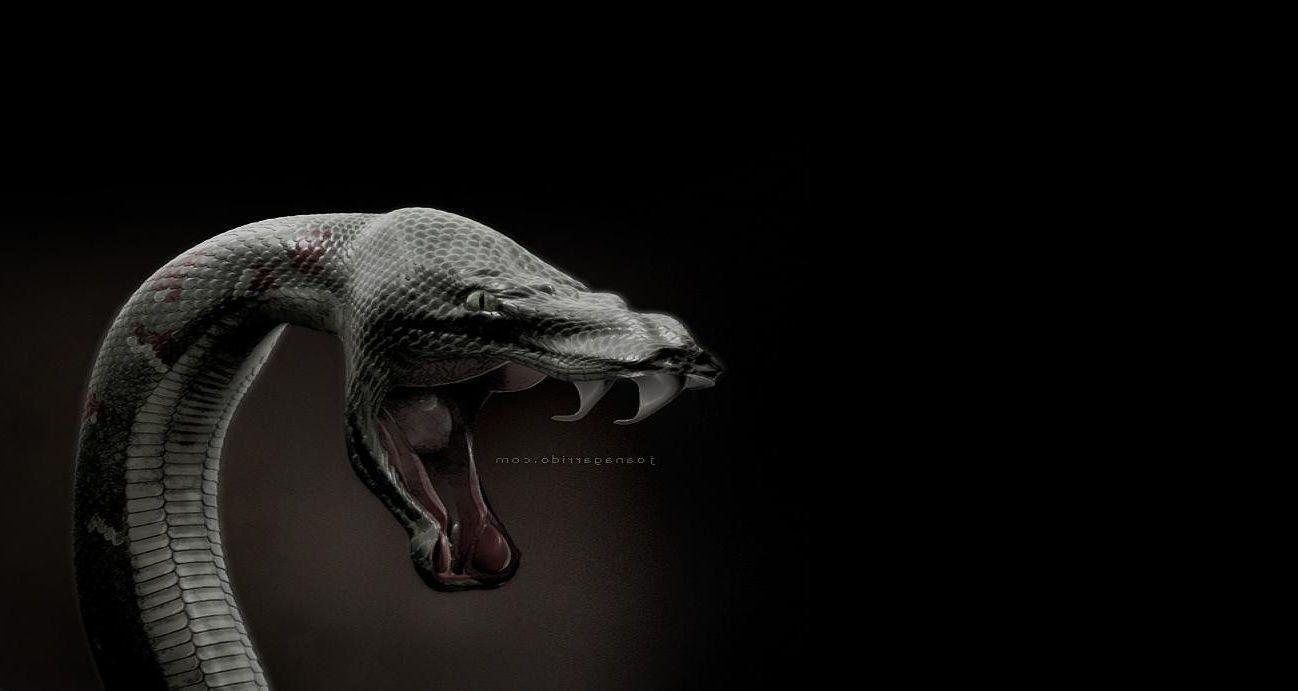Undefined Cool Wallpaper For Iphone 40 Wallpapers: Black Mamba Wallpapers