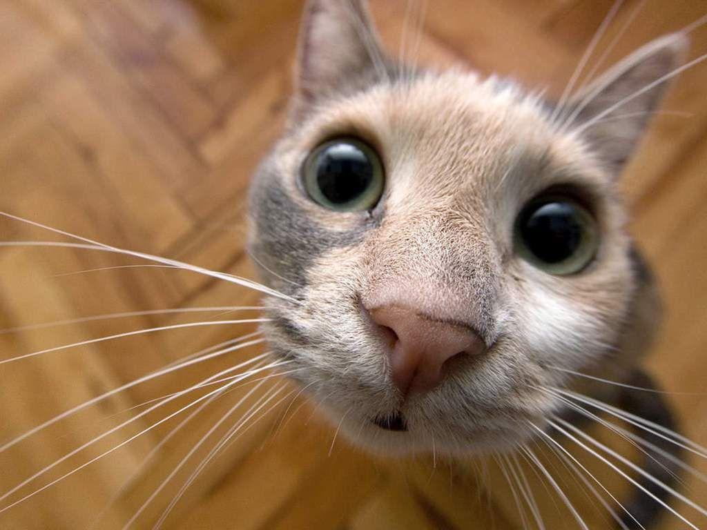 Смешные картинки с котами смотреть онлайн