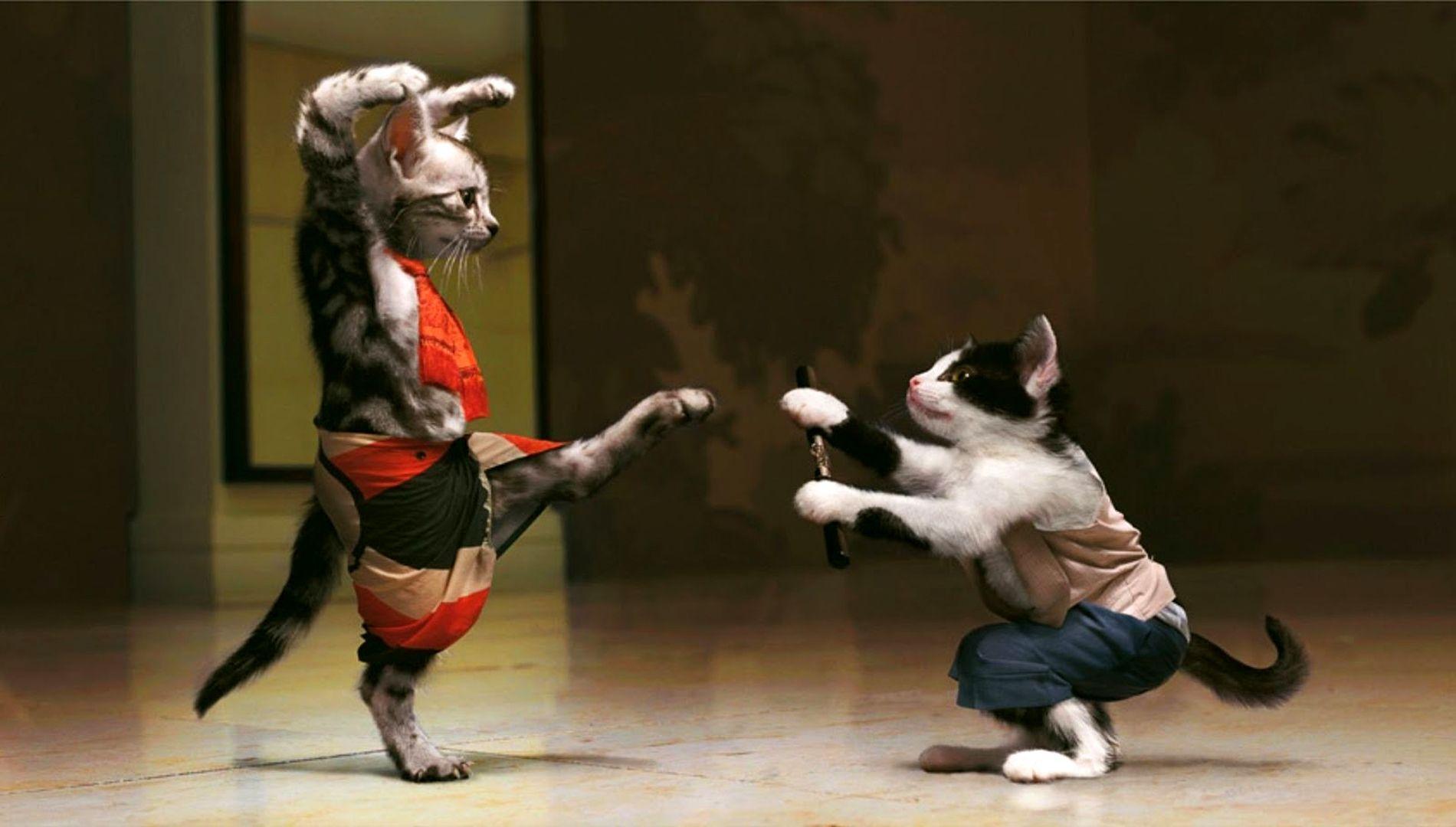 Funny Cats Wallpapers - Wallpaper Cave