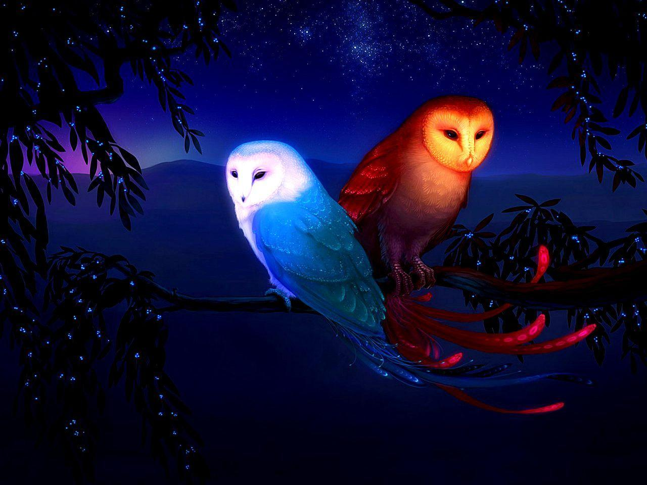 623 Owl HD Wallpapers