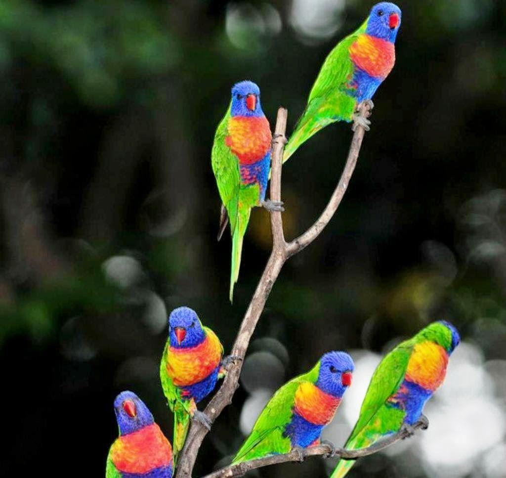 parrots wallpapers wallpaper cave