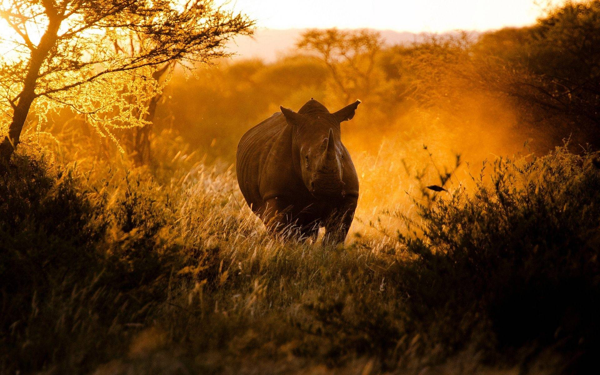 rhino wallpapers - wallpaper cave
