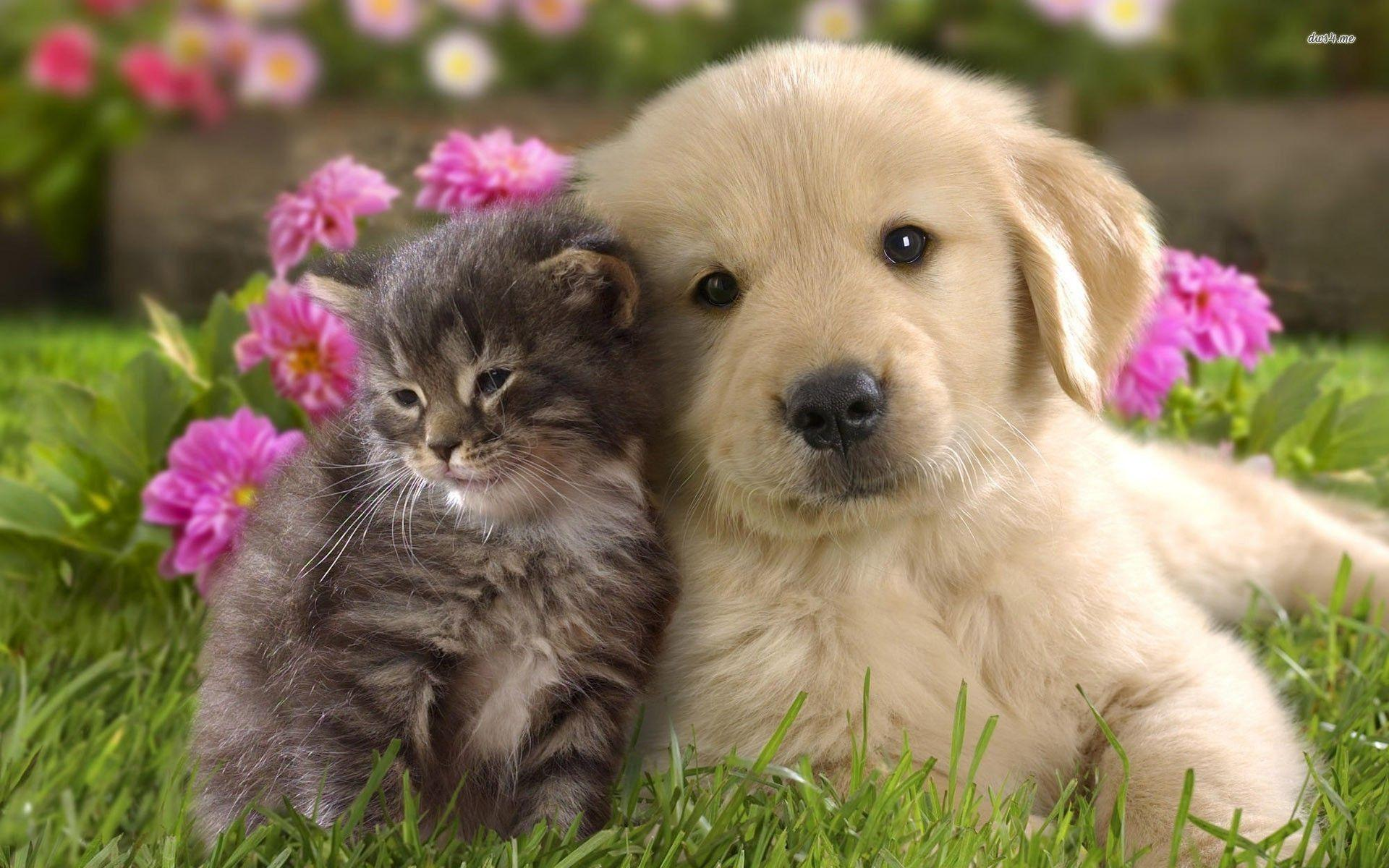 Best Puppies Wallpapers in High Quality, Puppies Backgrounds