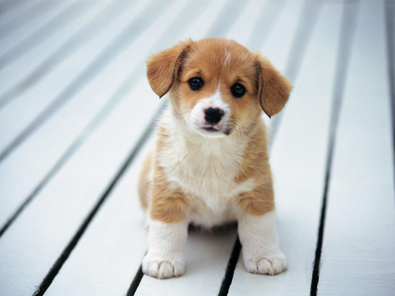 Collection of Puppies Wallpapers on HDWallpapers